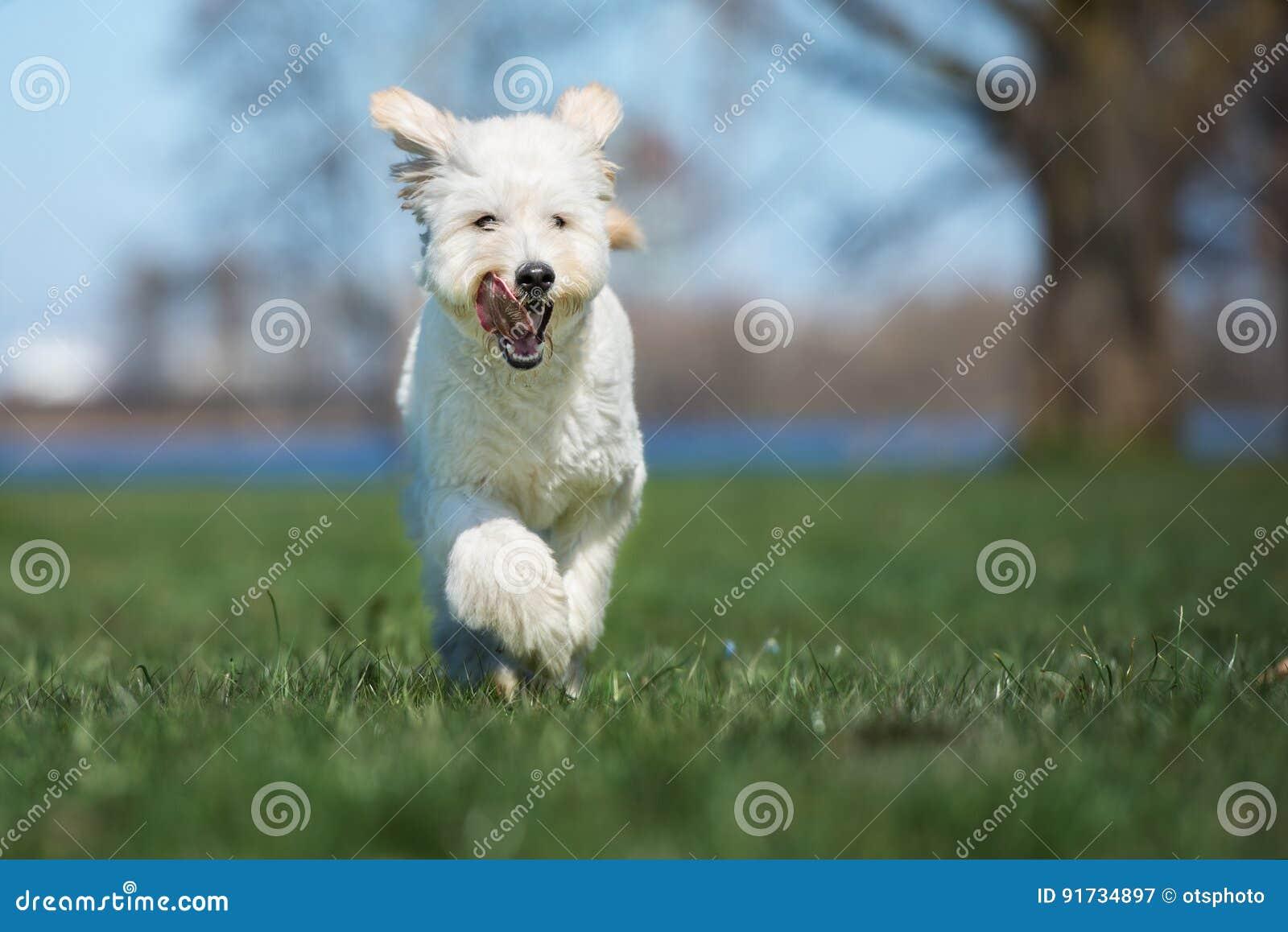 Perro mezclado adorable de la raza que corre al aire libre