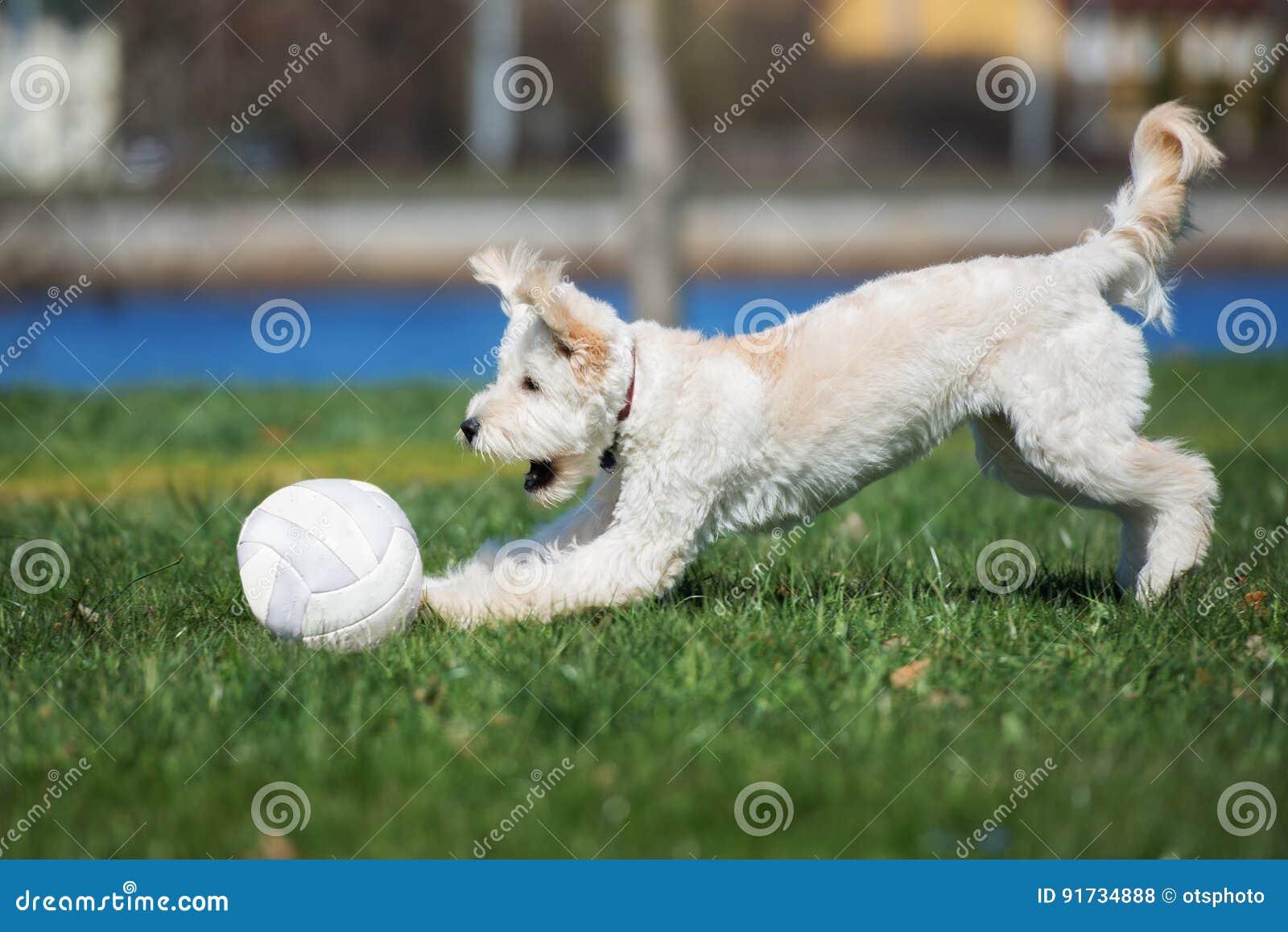 Perro mezclado adorable de la raza que juega con una bola al aire libre