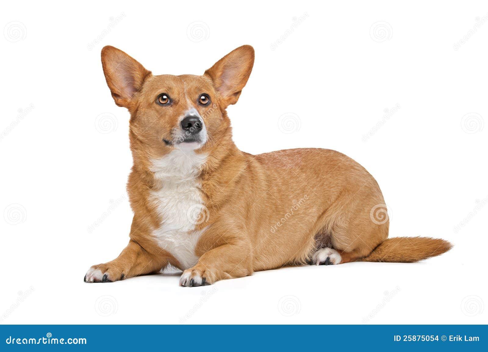 Perro mezclado de la casta