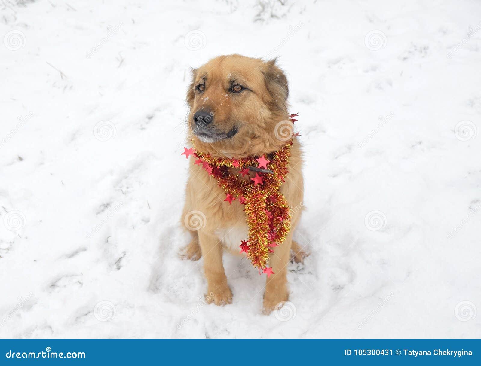 Perro mullido muy lindo en la guirnalda que lleva de la nieve, año de la Navidad del perro