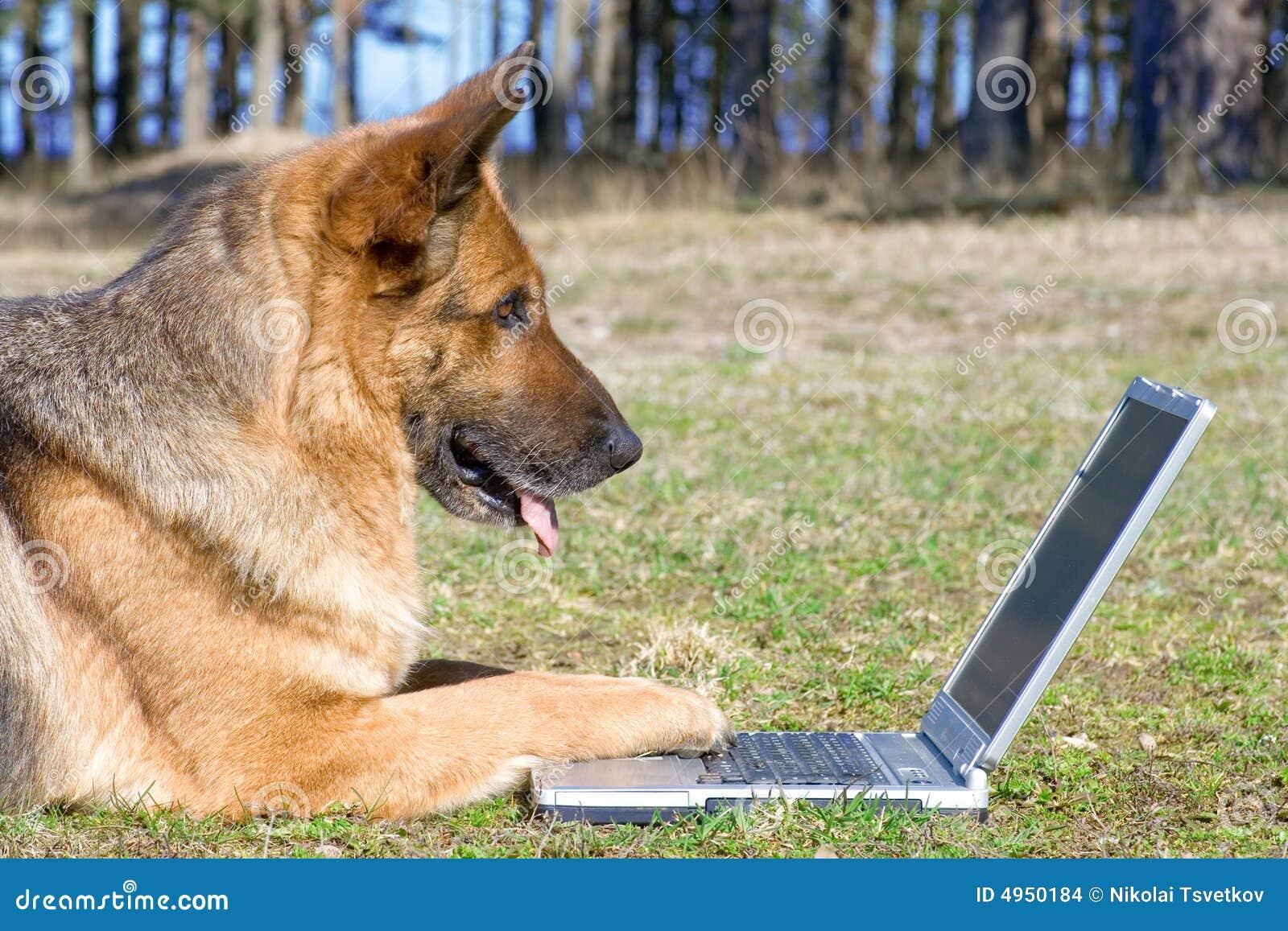 Perro pastor que pone en la hierba con la computadora portátil