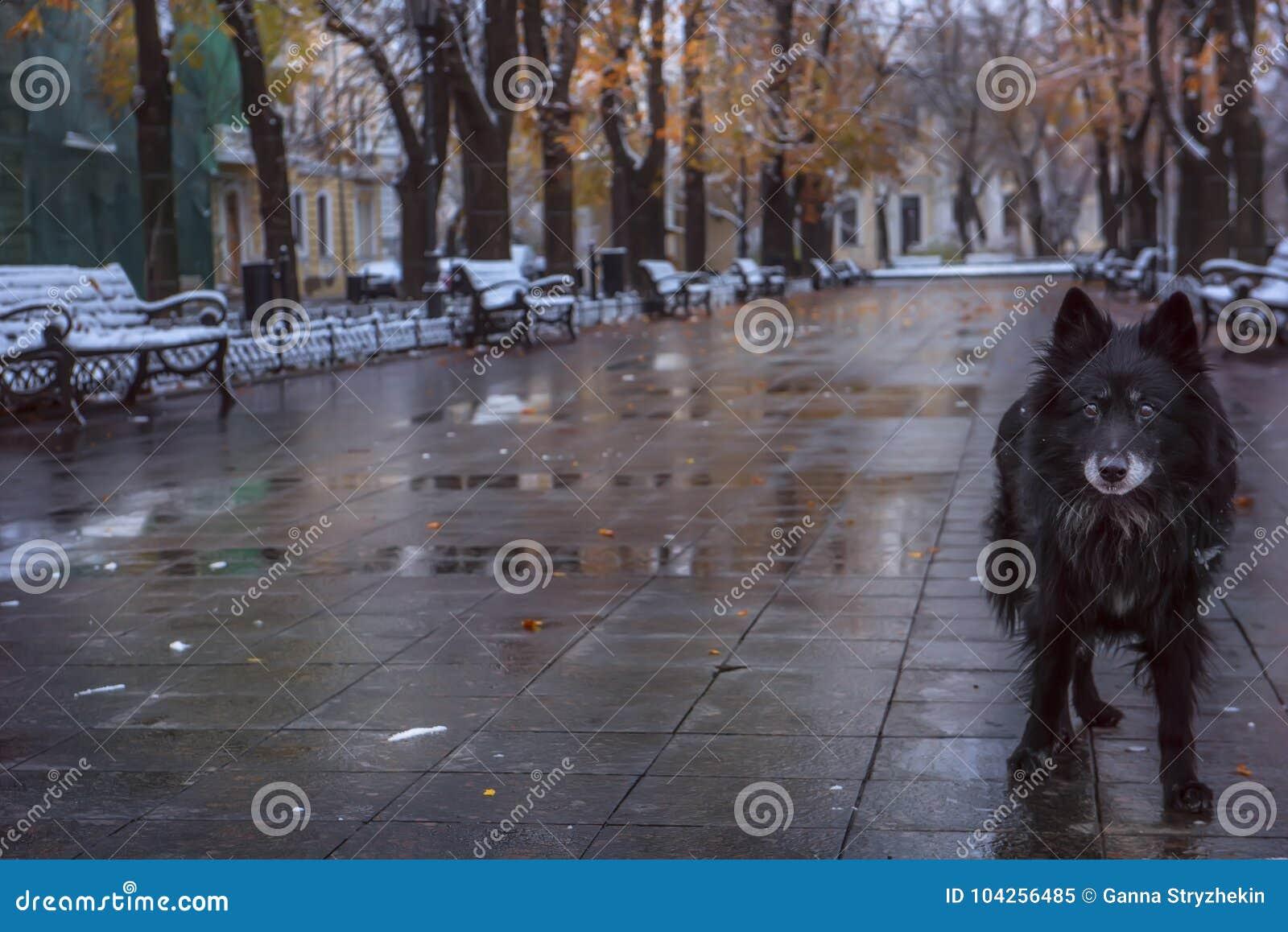 Perro perdido abandonado en un bulevar frío mojado del otoño