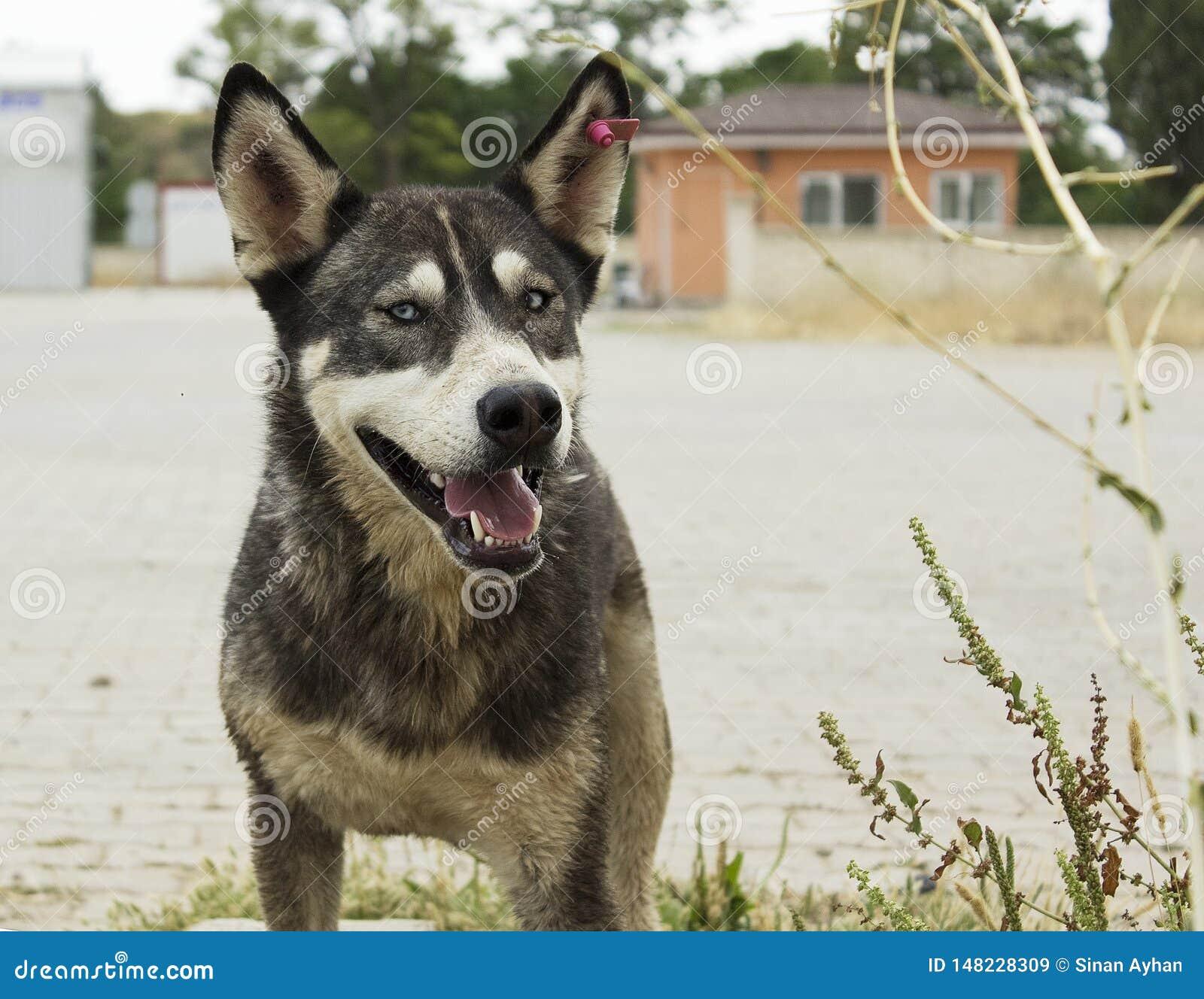 Perro perdido en el parque del refugio para animales