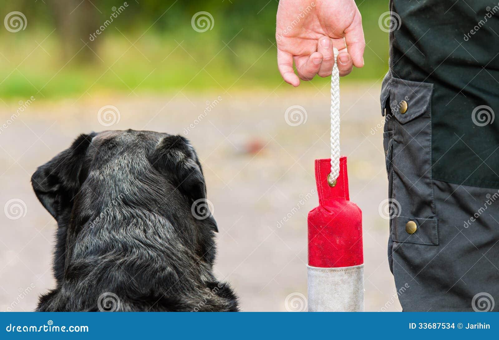 Perro perdiguero y maniqu imagenes de archivo imagen - Maniqui de perro ...