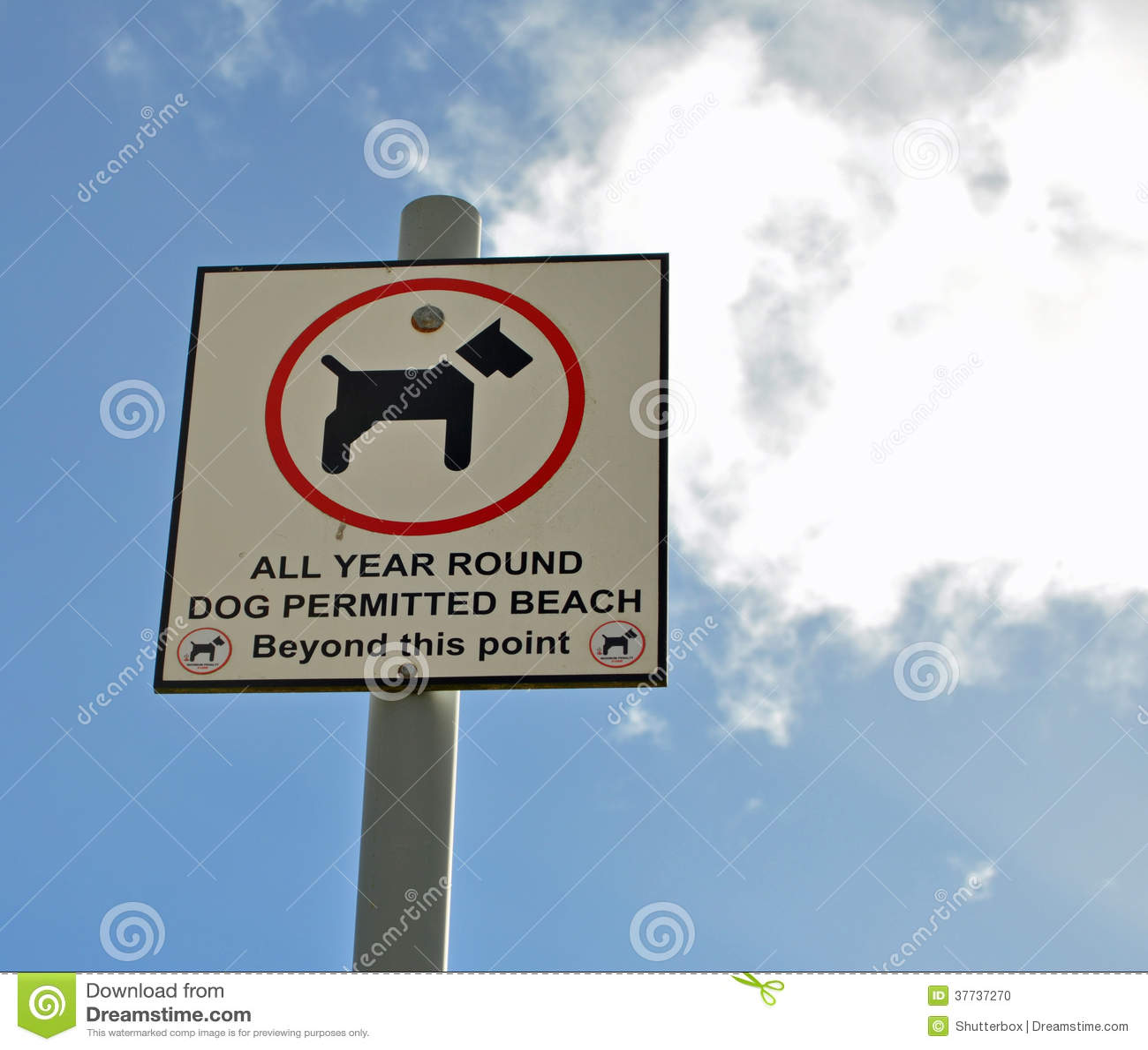 Perro permitido en muestra de la playa