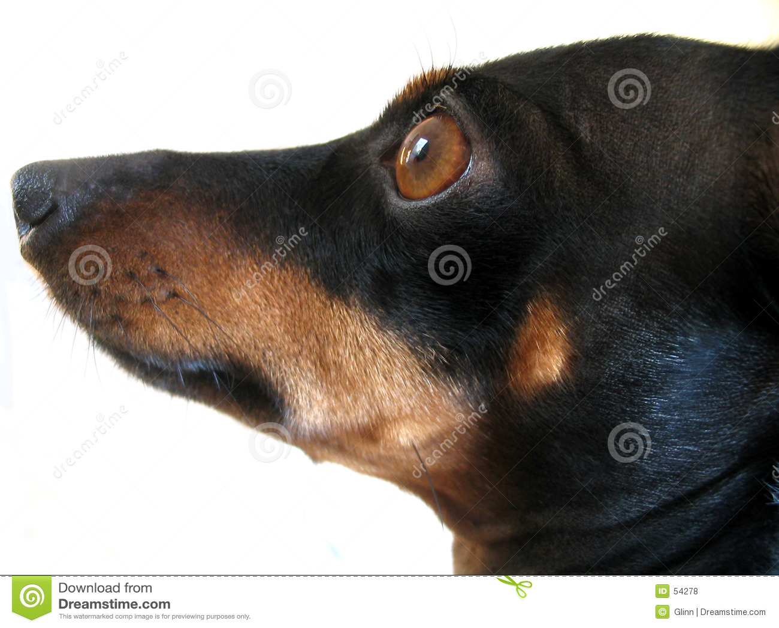 Perro, qué a