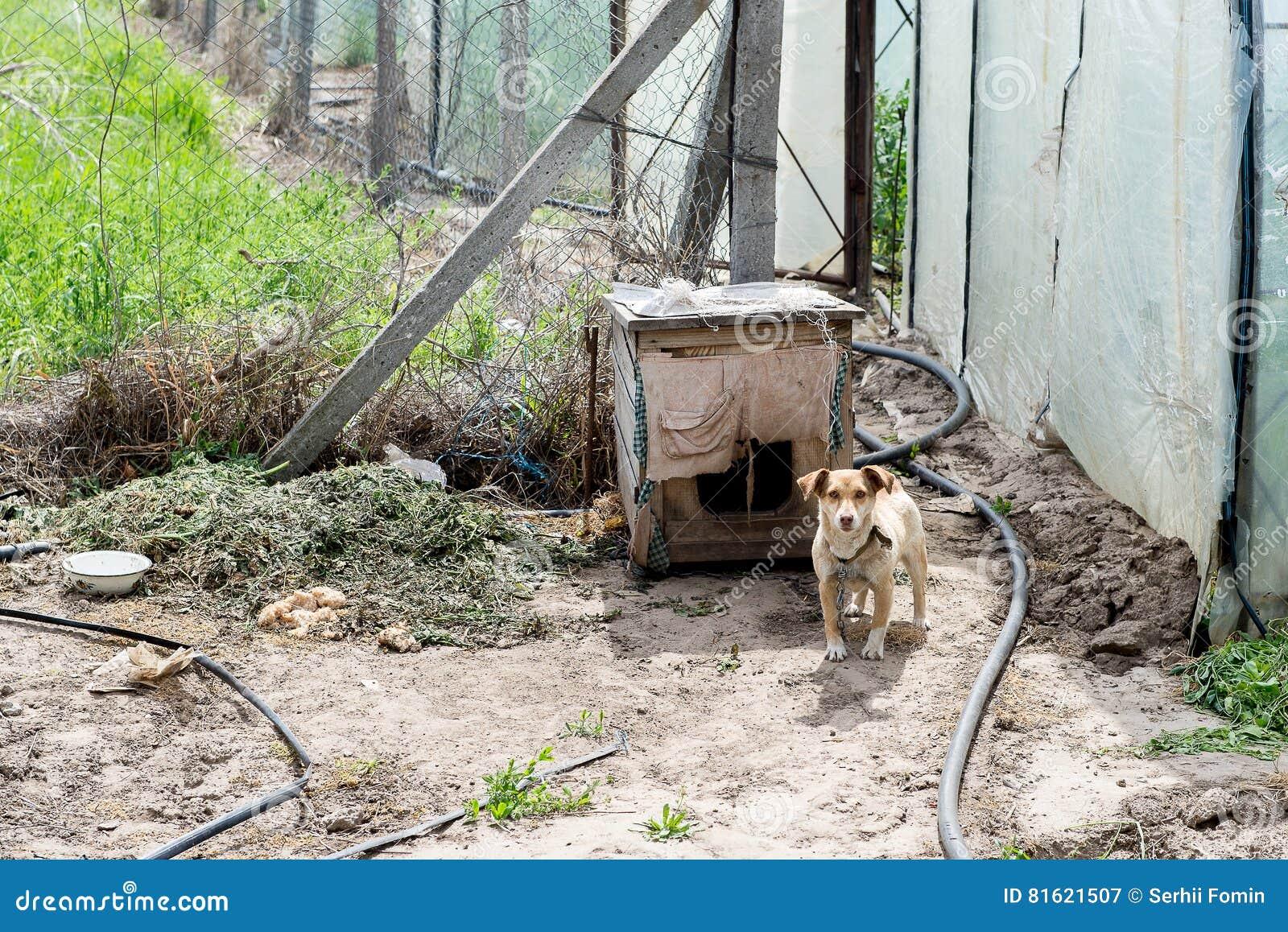 Perro que guarda a la yarda de los ladrones canino Perro al aire libre