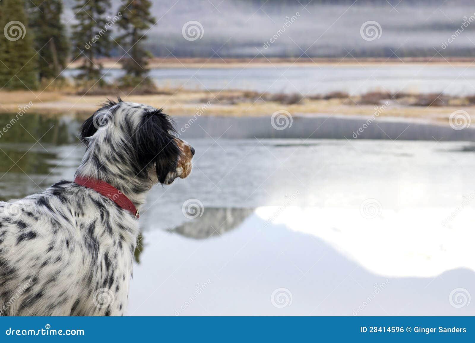 Perro que mira hacia fuera sobre el lago