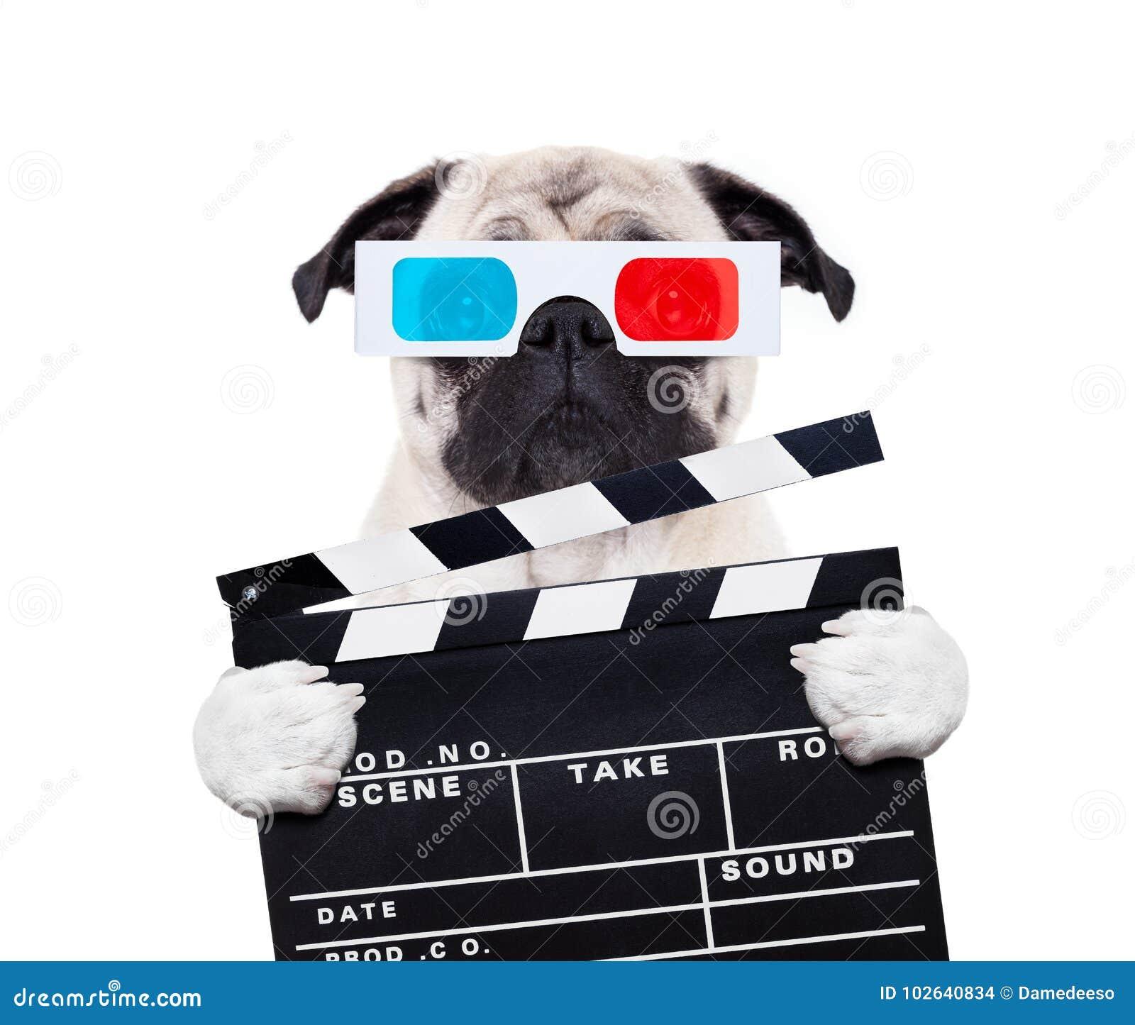 Perro que mira las películas