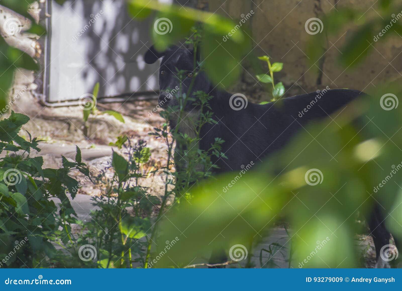 Perro que oculta detrás de arbustos en la calle