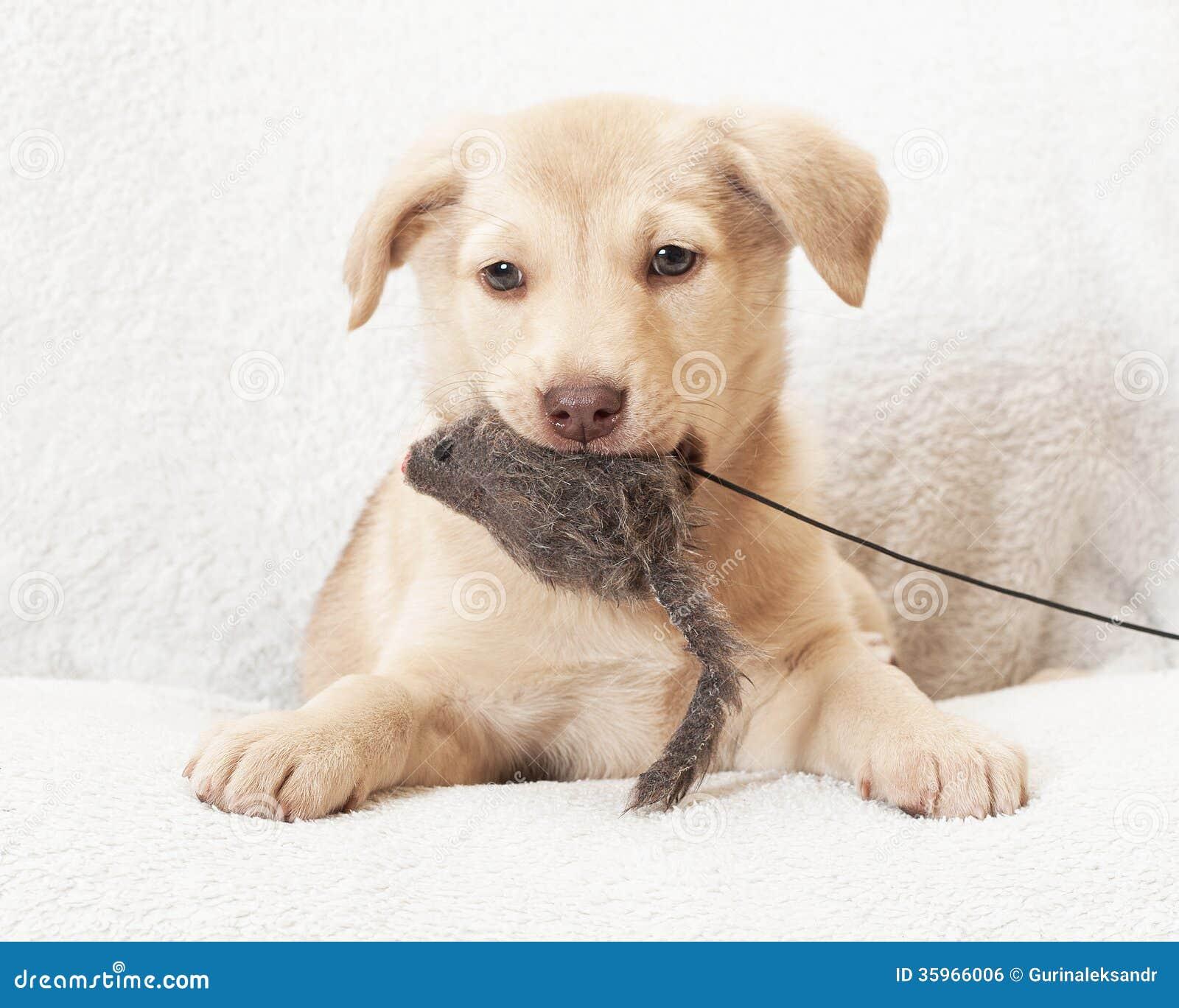Perro que sostiene un juguete relleno