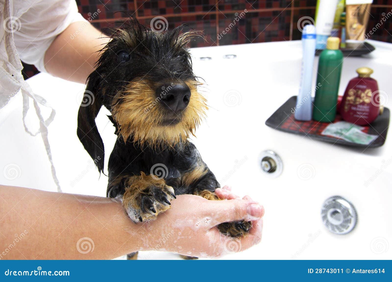 Perro que toma un baño