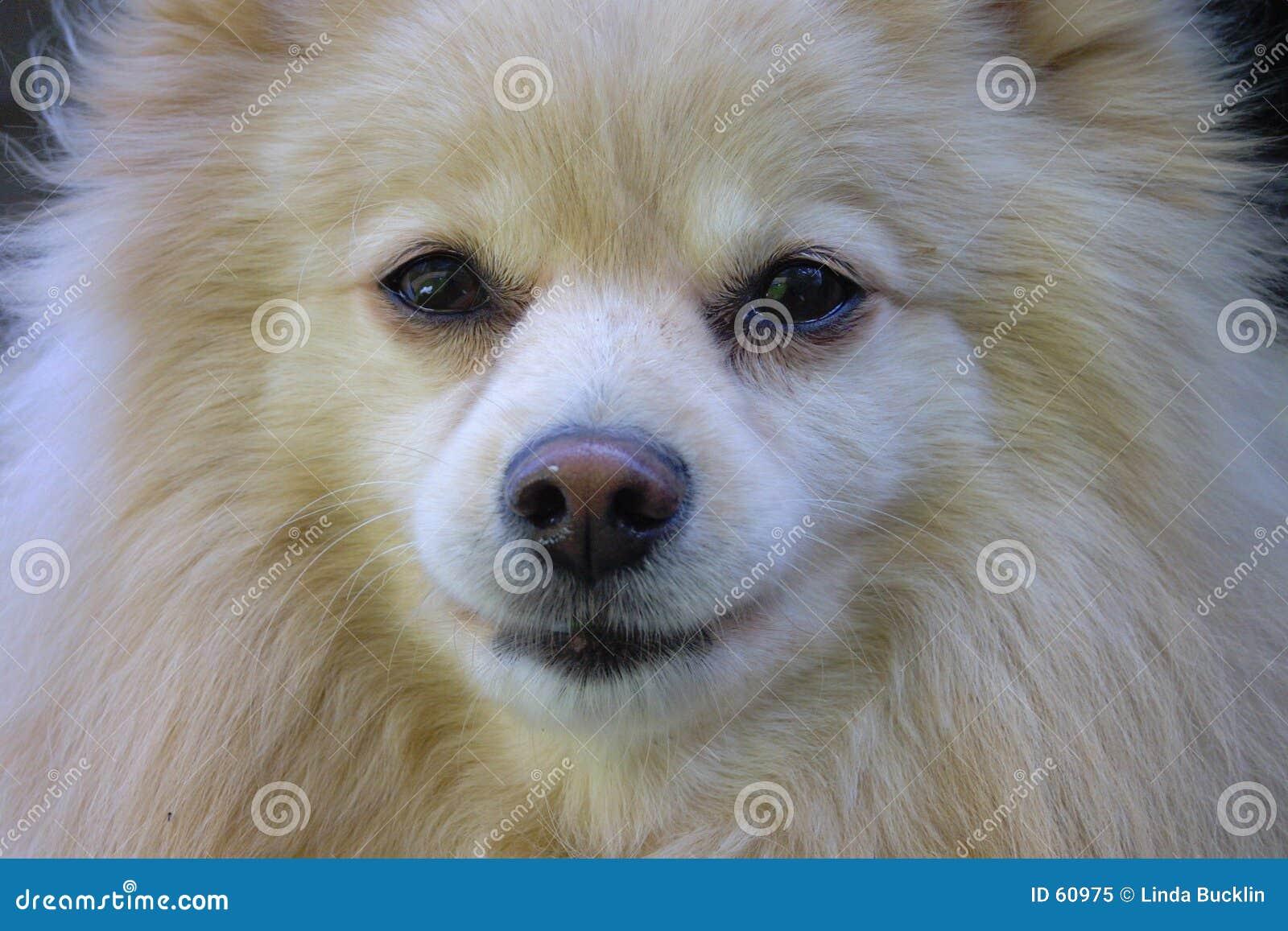 Perro - retrato del primer