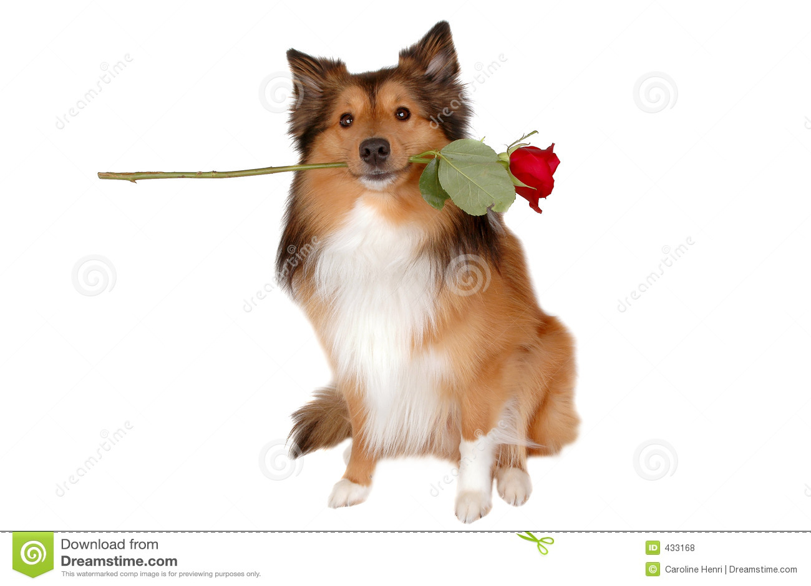 Perro romántico