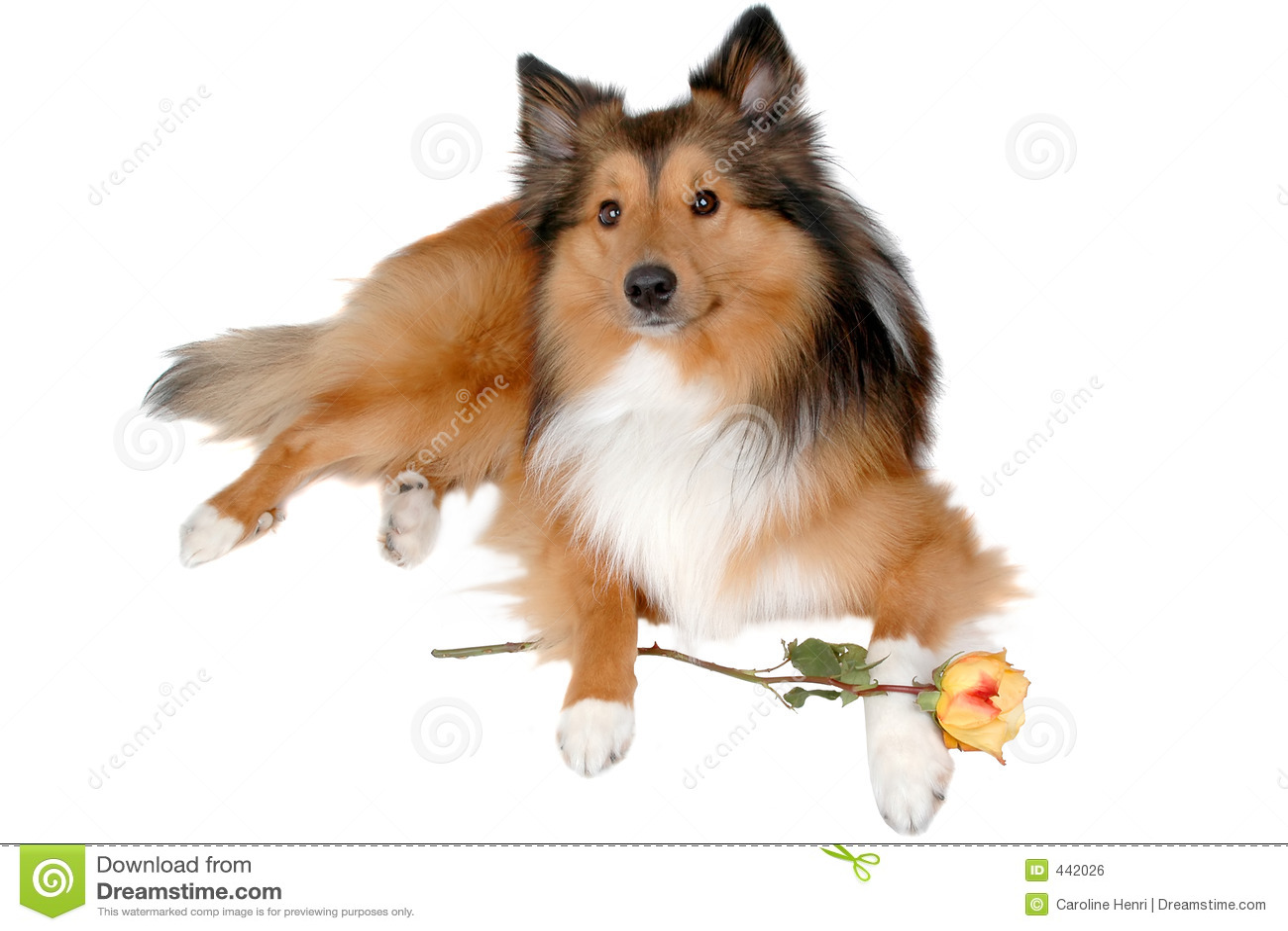 Perro romántico 5