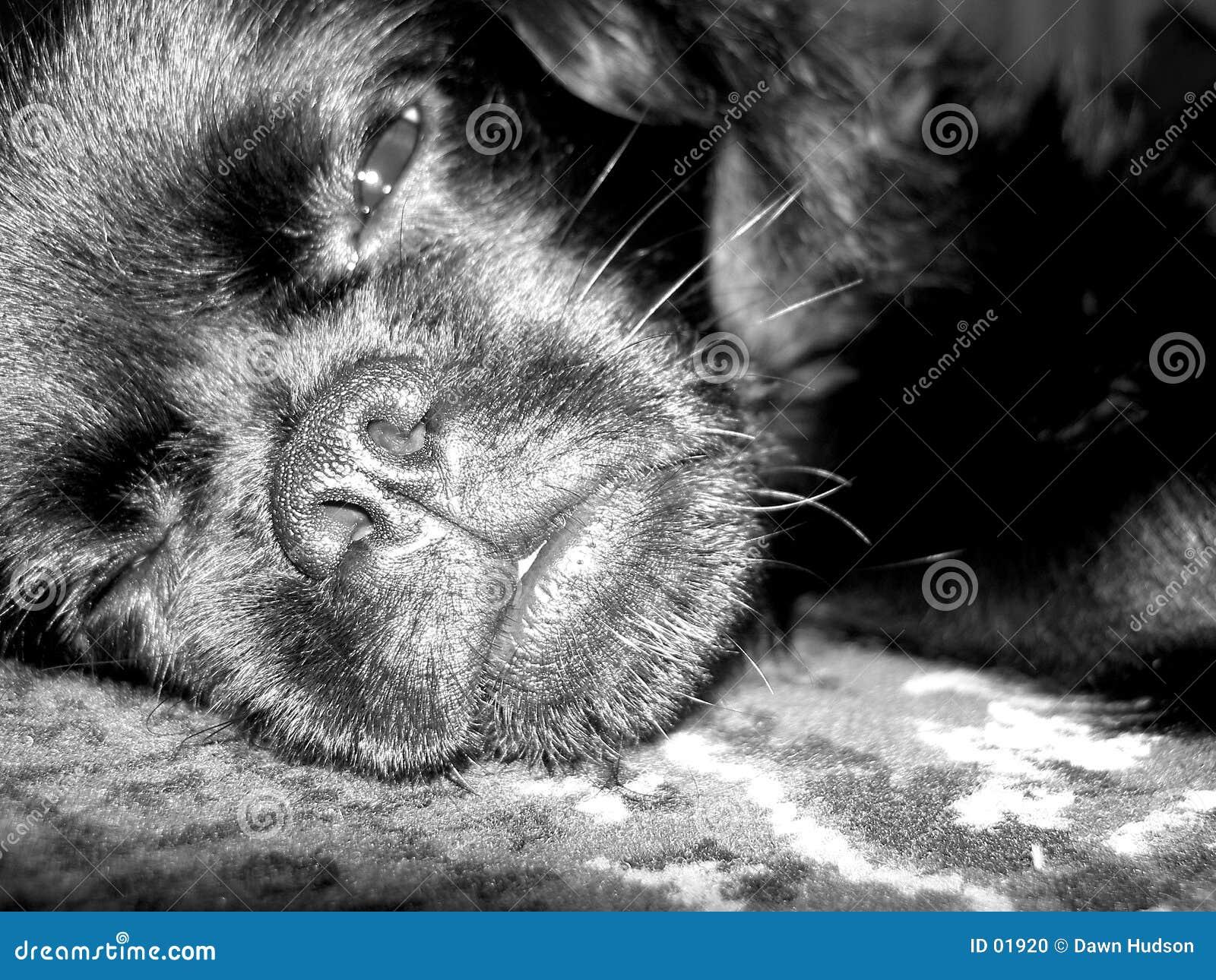 Perro soñoliento