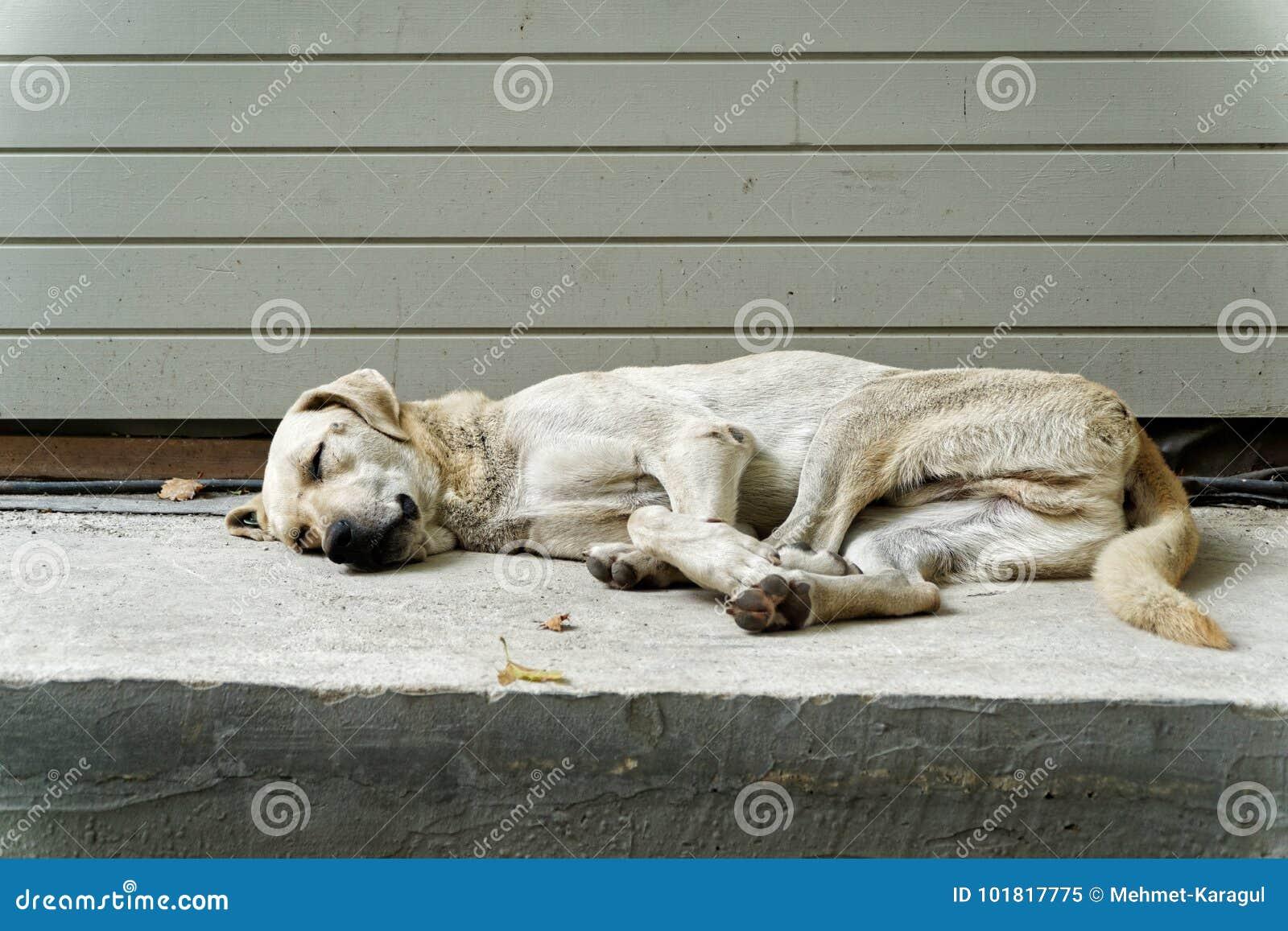 Perro soñoliento de la calle