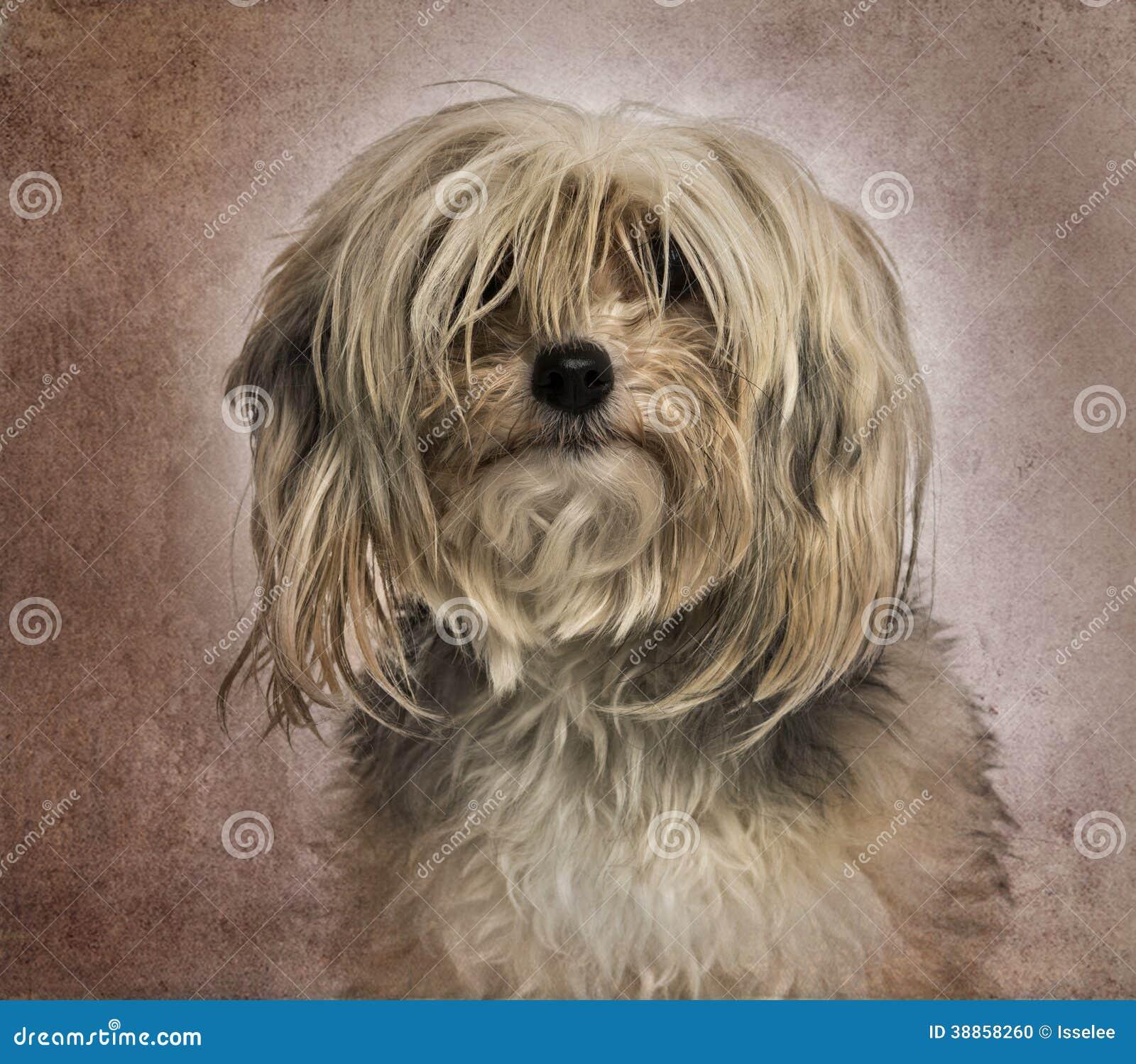 Monedero de mimbre de perro vintage