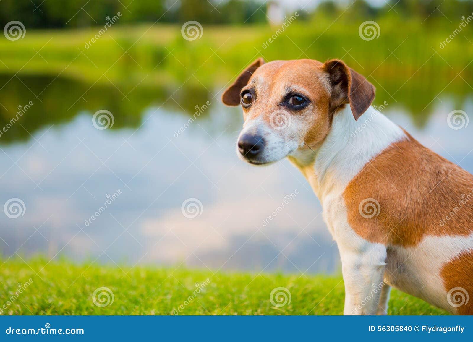 Perro tranquilo que se sienta en los bancos del río