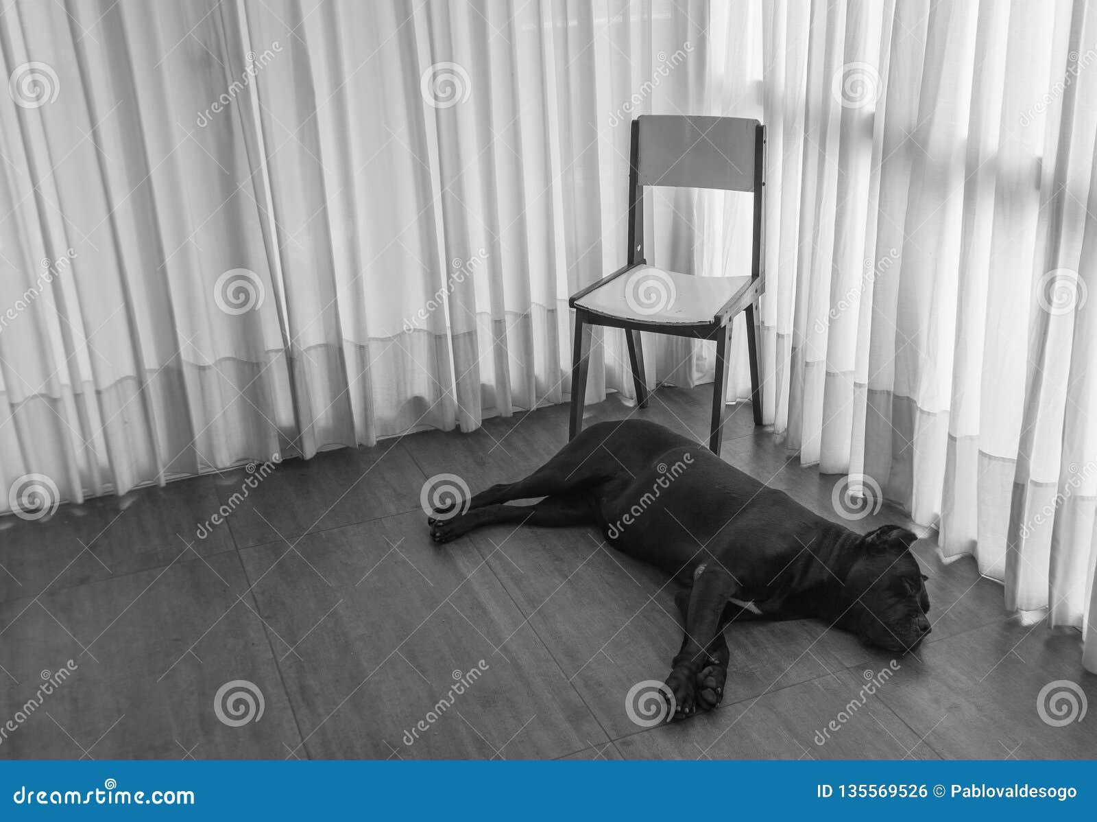Perro triste que espera con la silla
