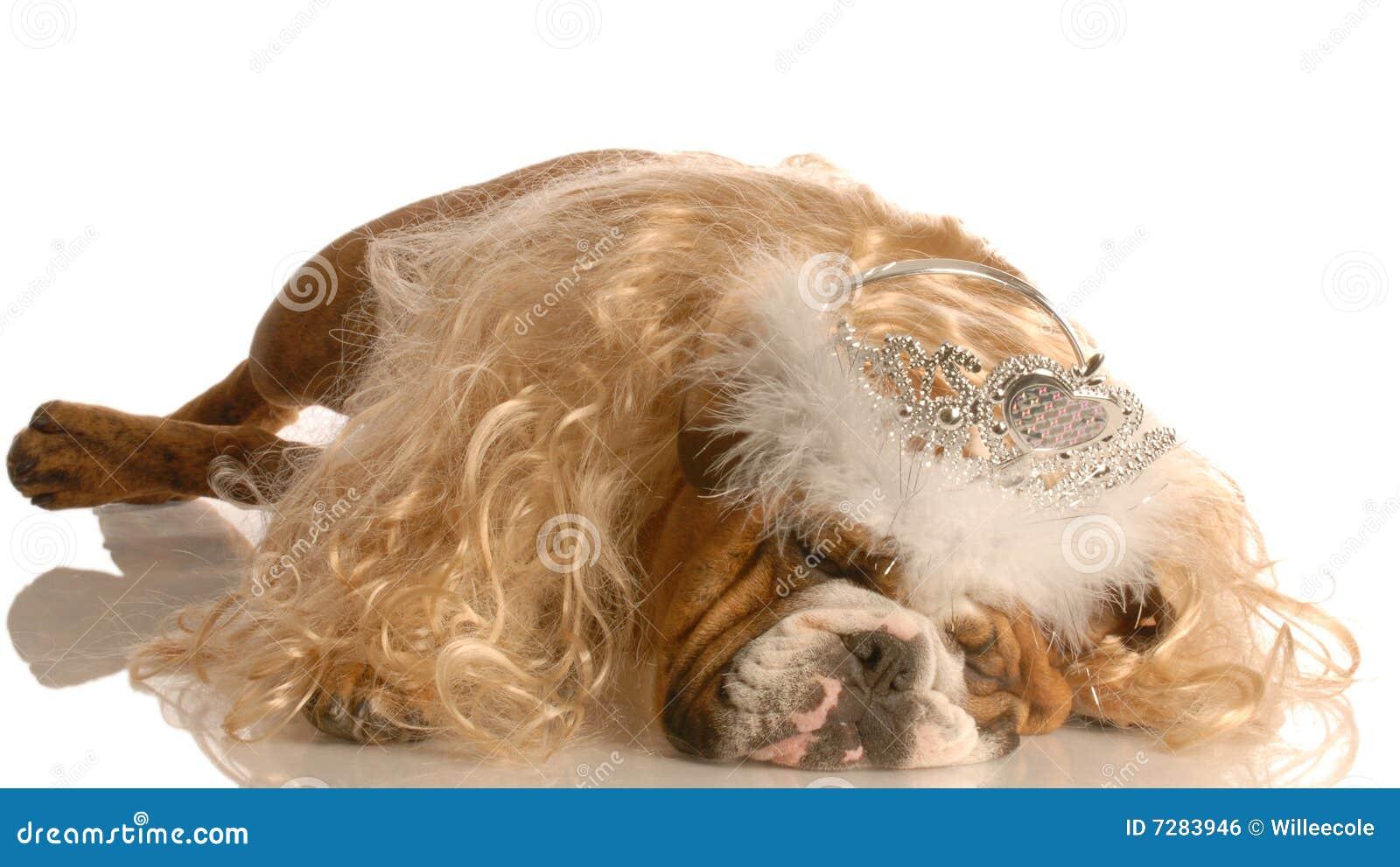 Perro vestido para arriba como princesa