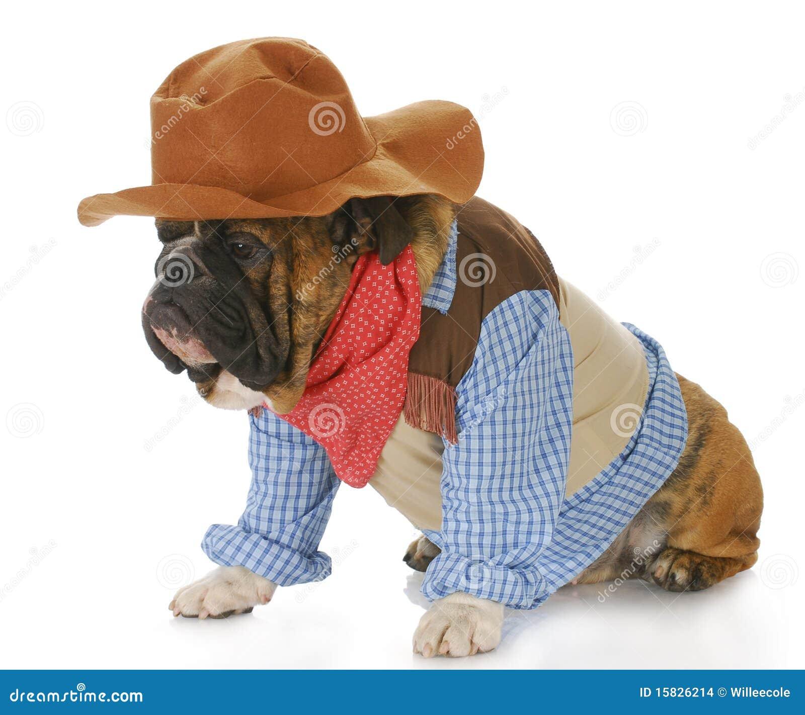 Perro vestido para arriba como un vaquero