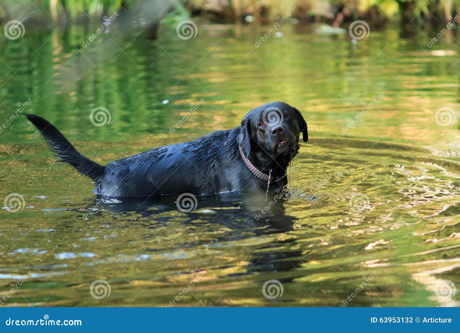 Perro y agua