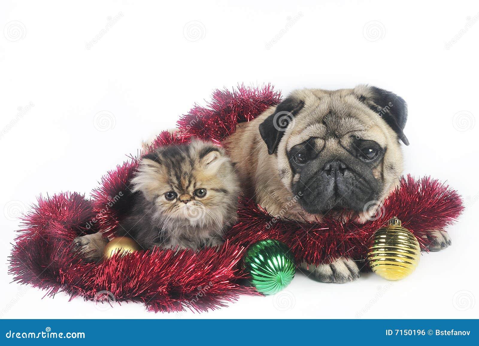 Perro y gatitos de la Navidad