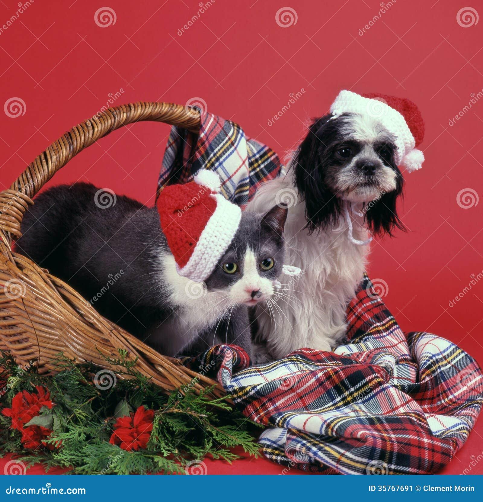 Perro y gato de la Navidad