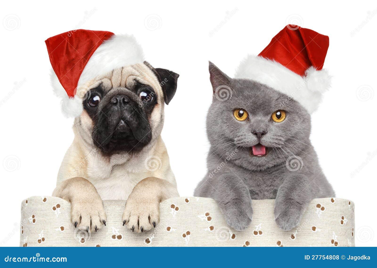 Perro y gato en sombrero rojo de la Navidad
