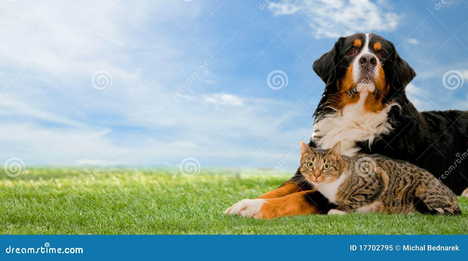 Perro y gato junto