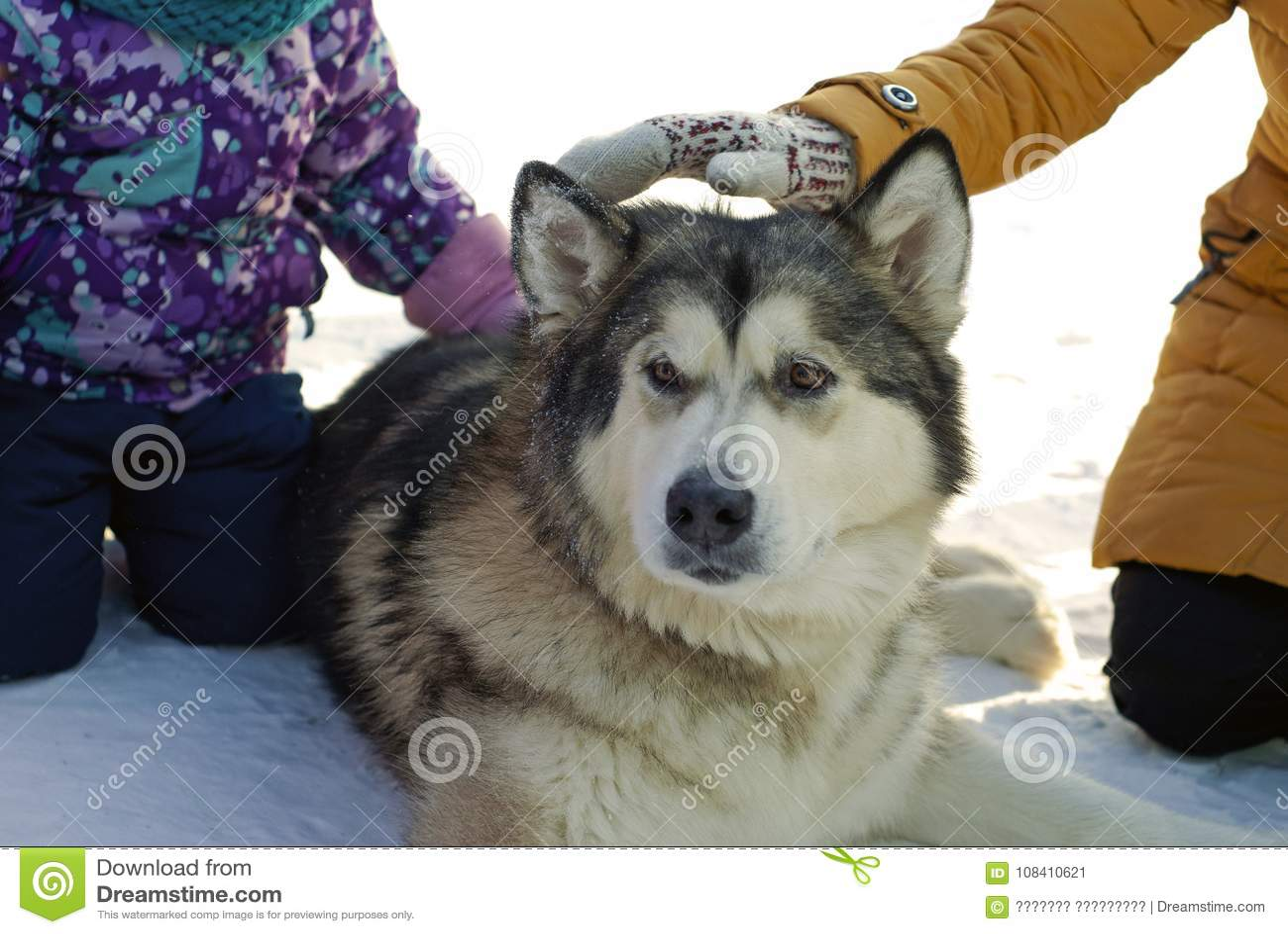 Perro y niños grandes