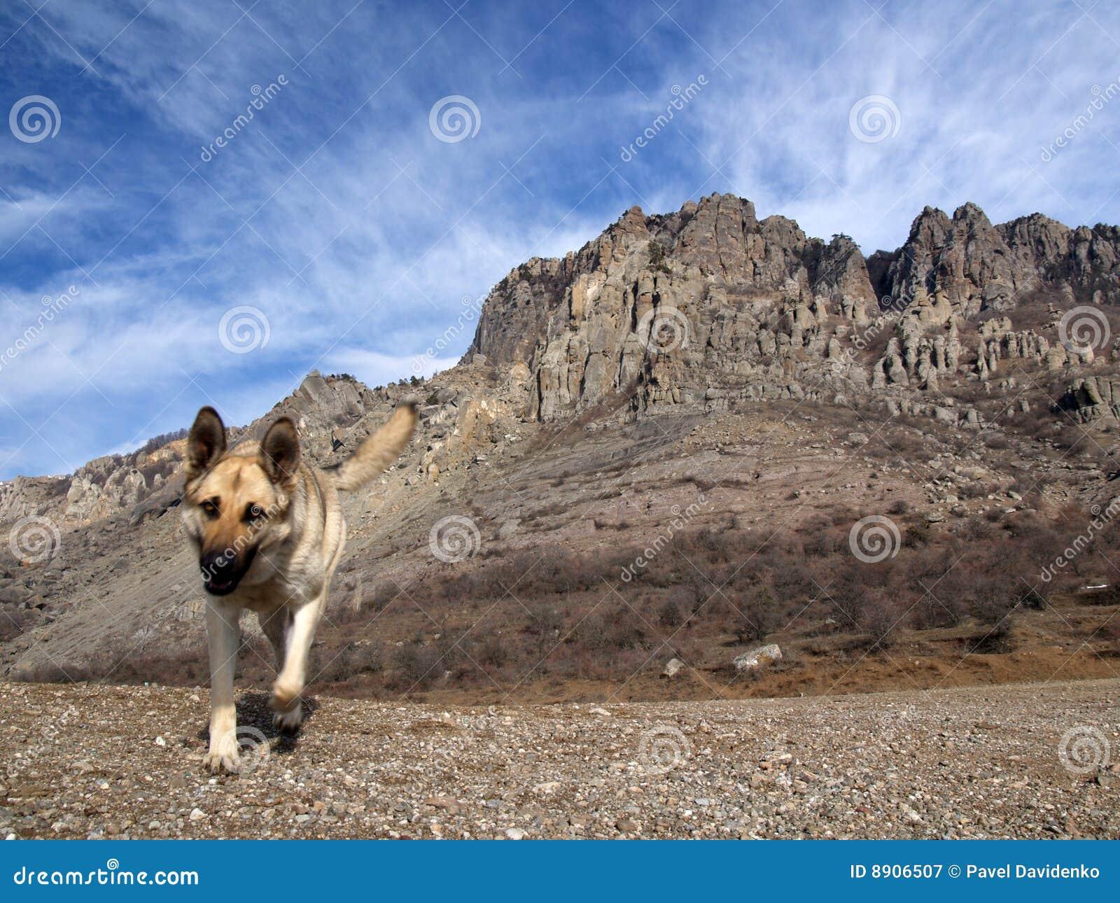Perro y rocas