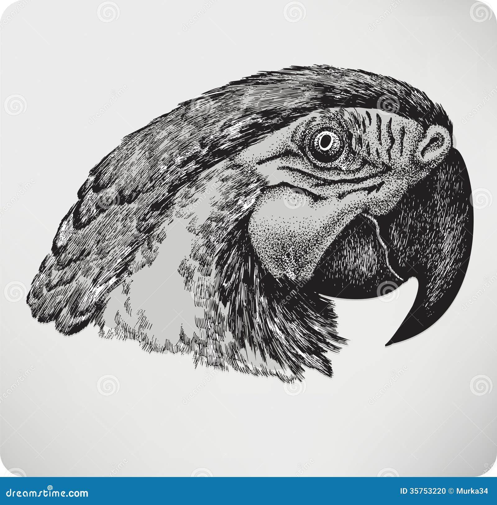 Perroquet d 39 oiseau dessin de main illustration de - Dessins de perroquets ...