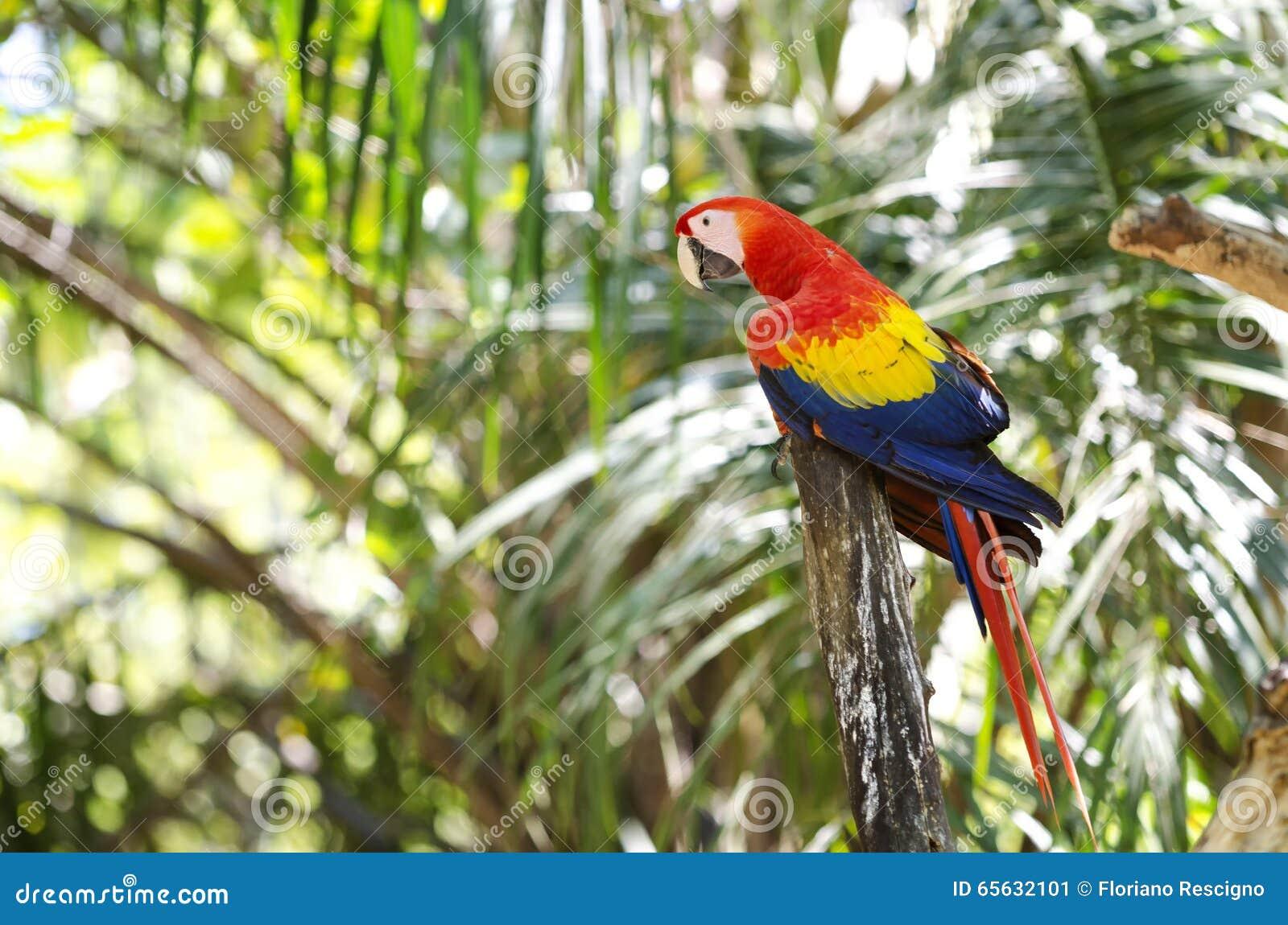 Perroquet dans la forêt