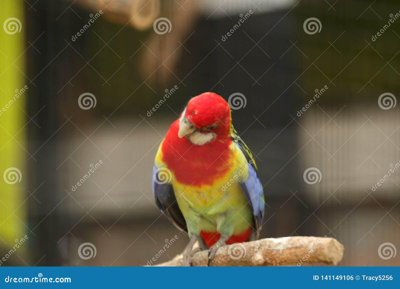 Perroquet en parc de faune de Pékin