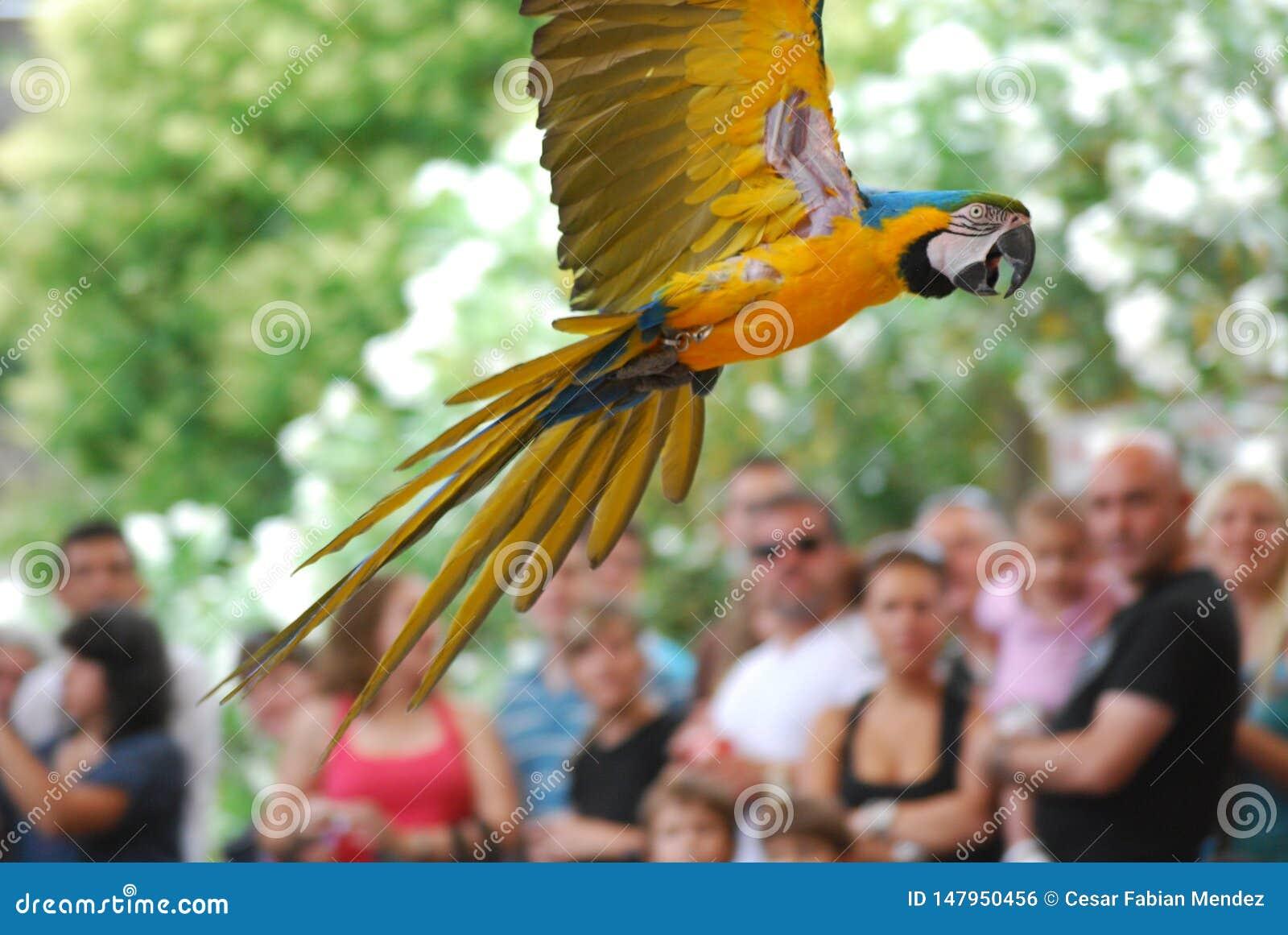 Perroquet en vol, oiseau exotique
