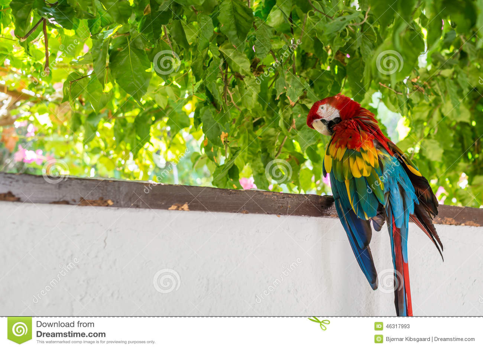 perroquet rouge d 39 ara de vert bleu photo stock image 46317993. Black Bedroom Furniture Sets. Home Design Ideas