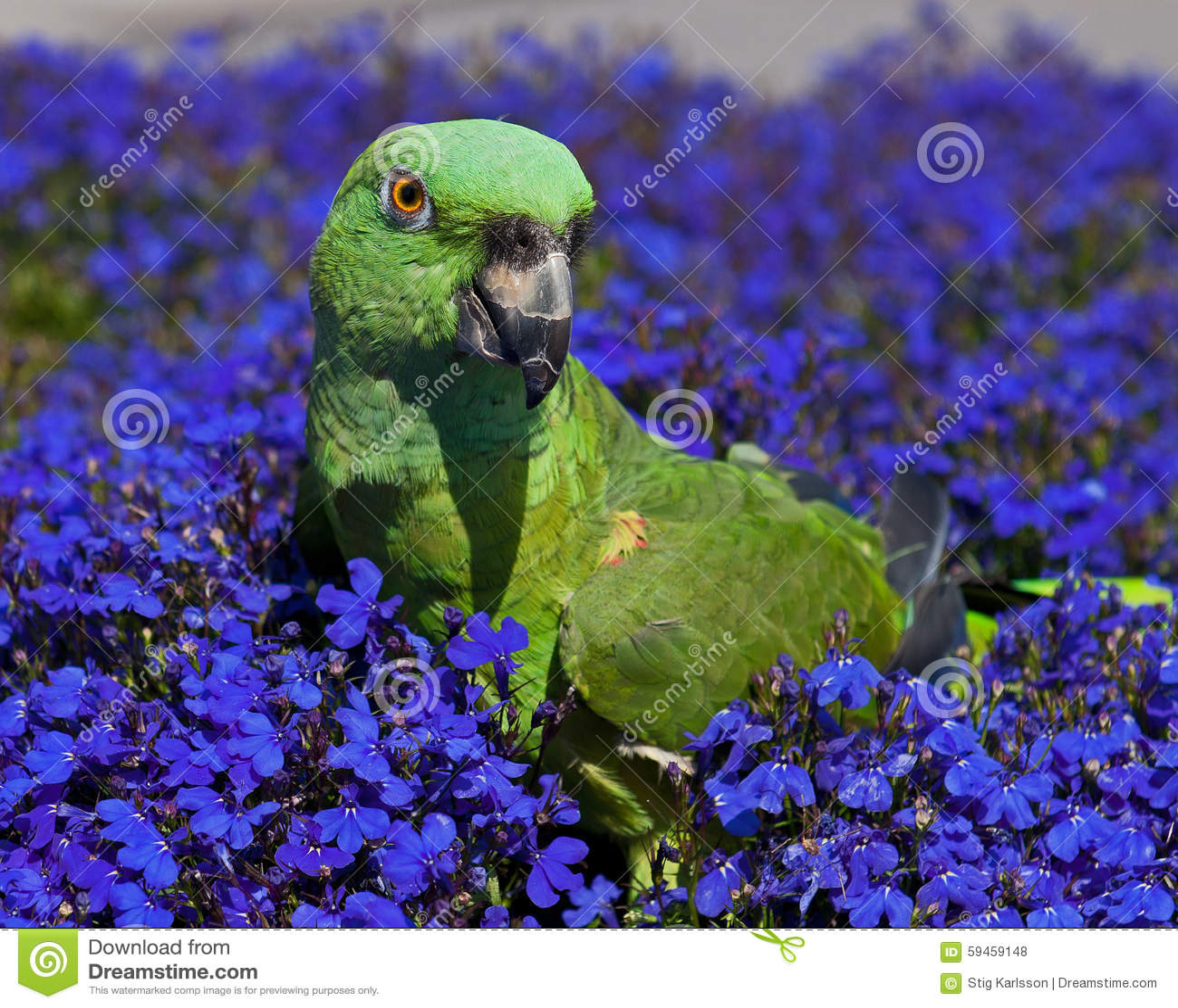 Perroquet vert sur les fleurs bleues