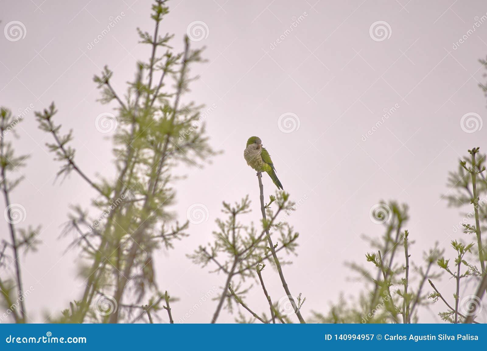 Perroquet vert sur un arbre au coucher du soleil