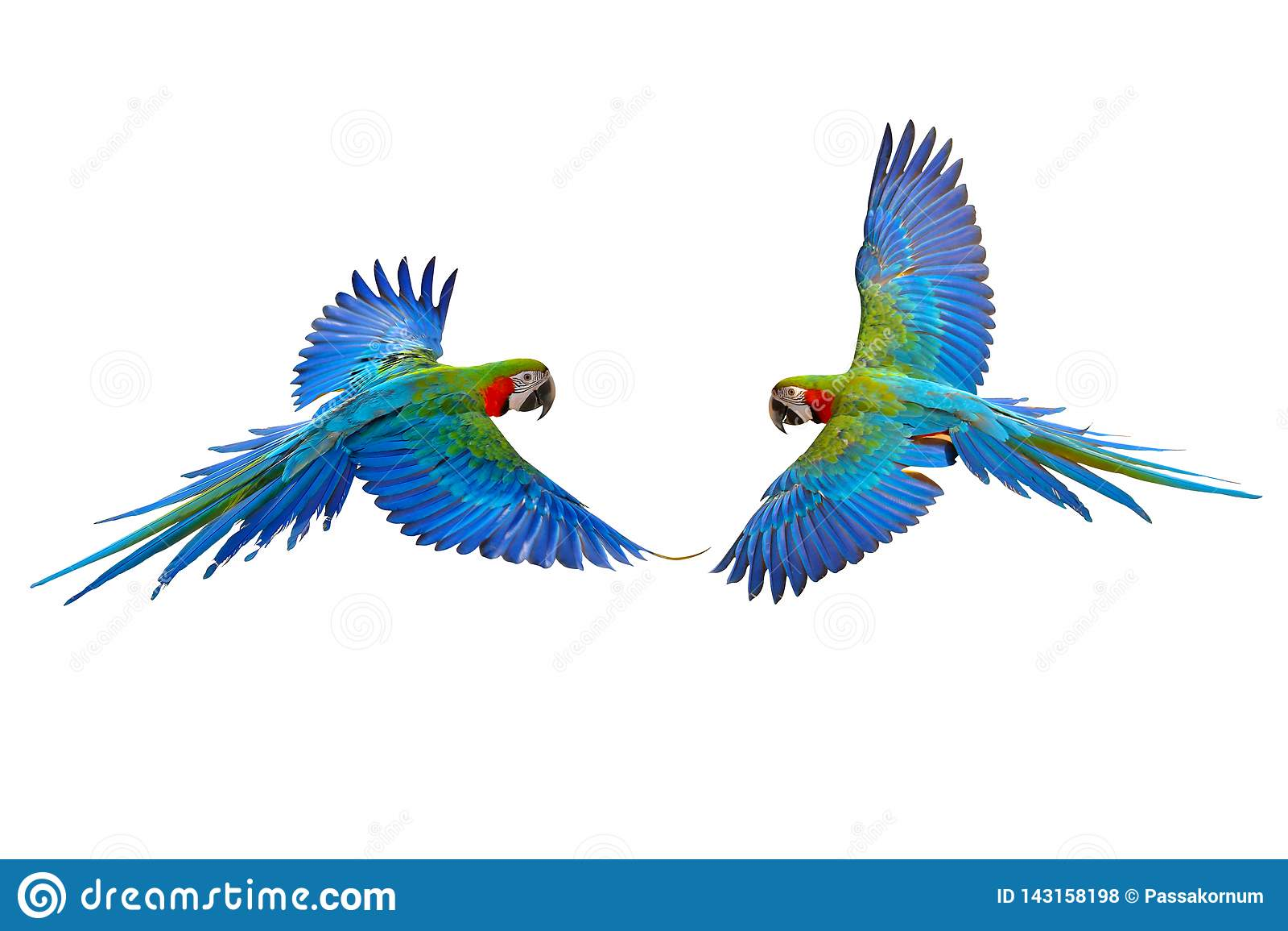Perroquet volant coloré
