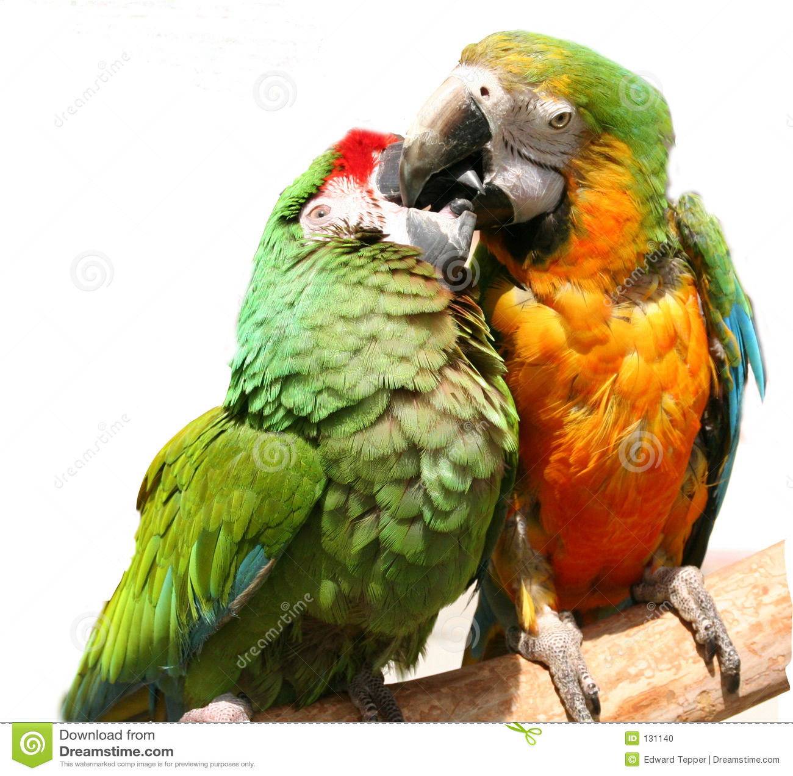 Perroquets amicaux