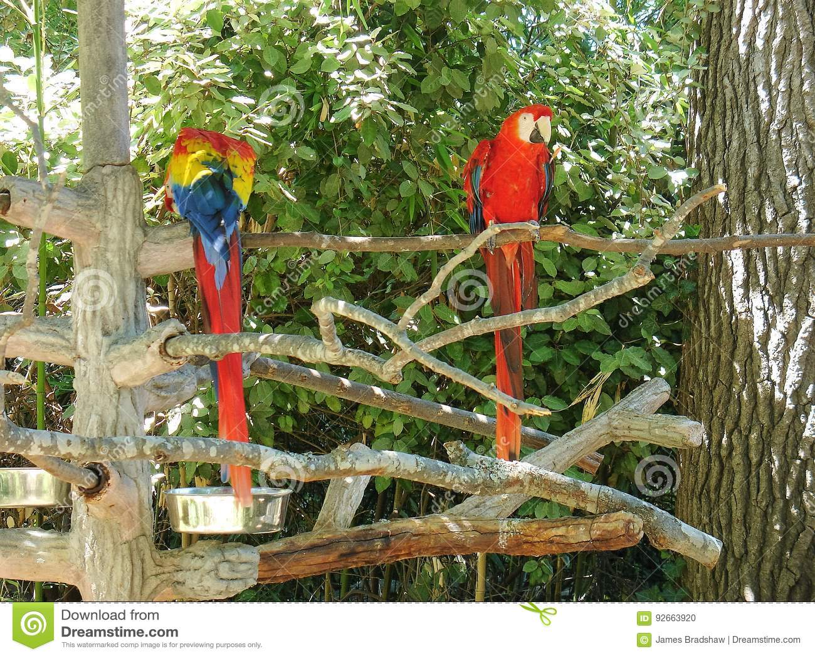 Perroquets au zoo