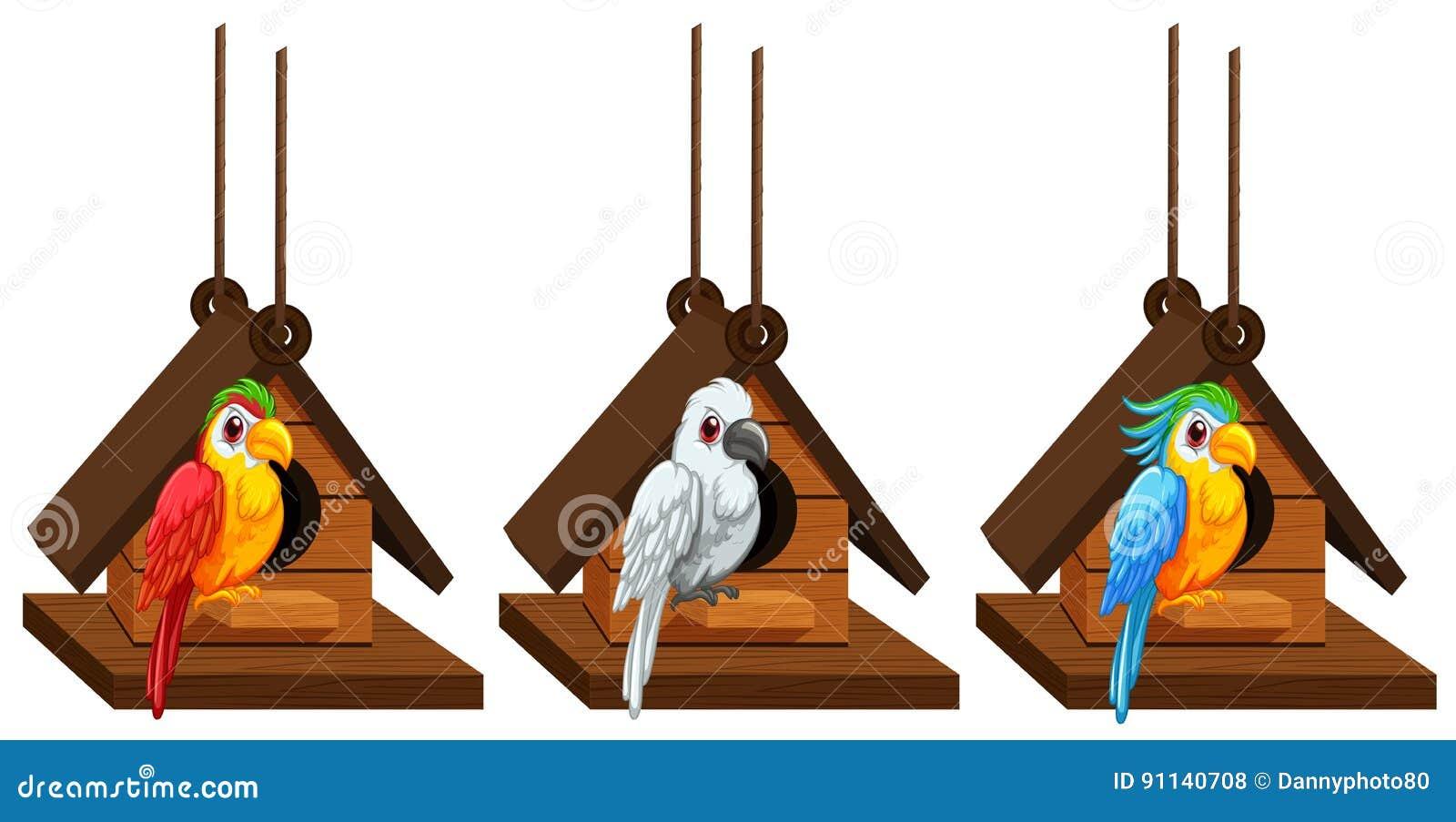 Perroquets d ara vivant dans la volière