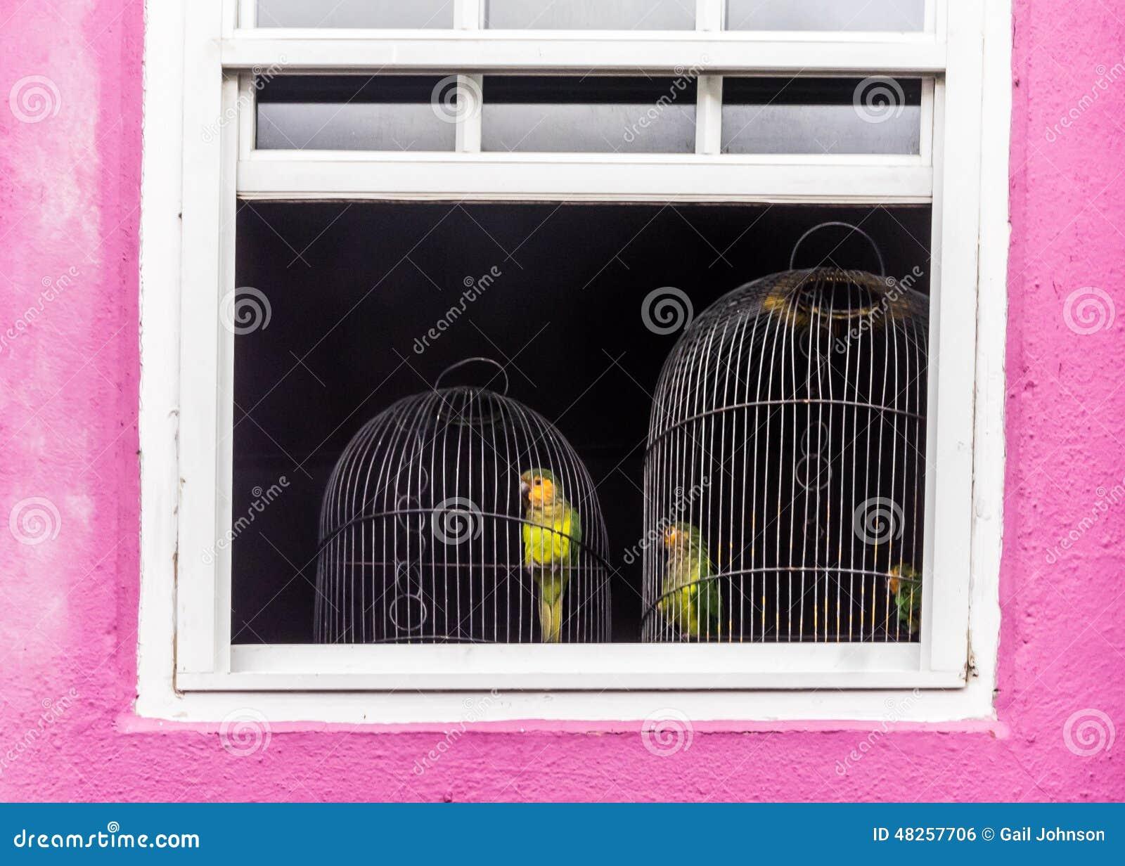 Perroquets dans une cage
