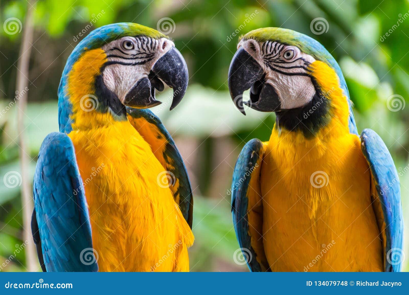 Perroquets se faisant face