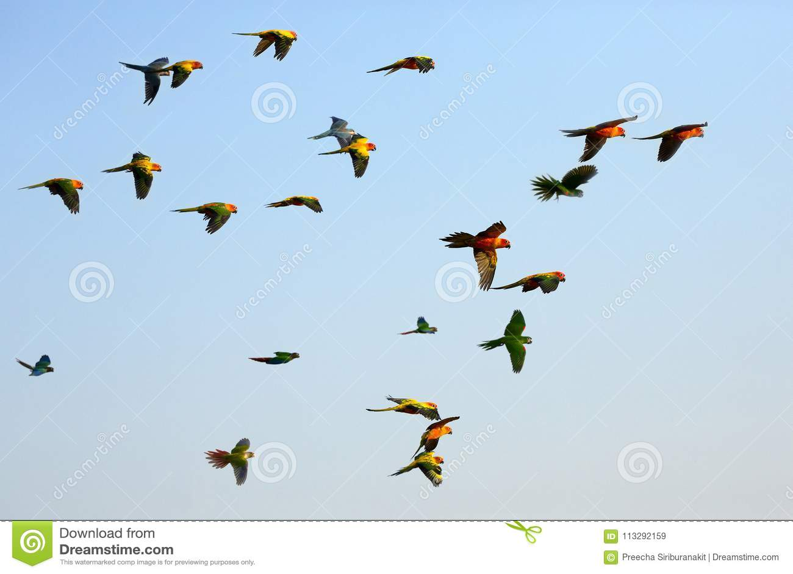 Perroquets volant dans le ciel
