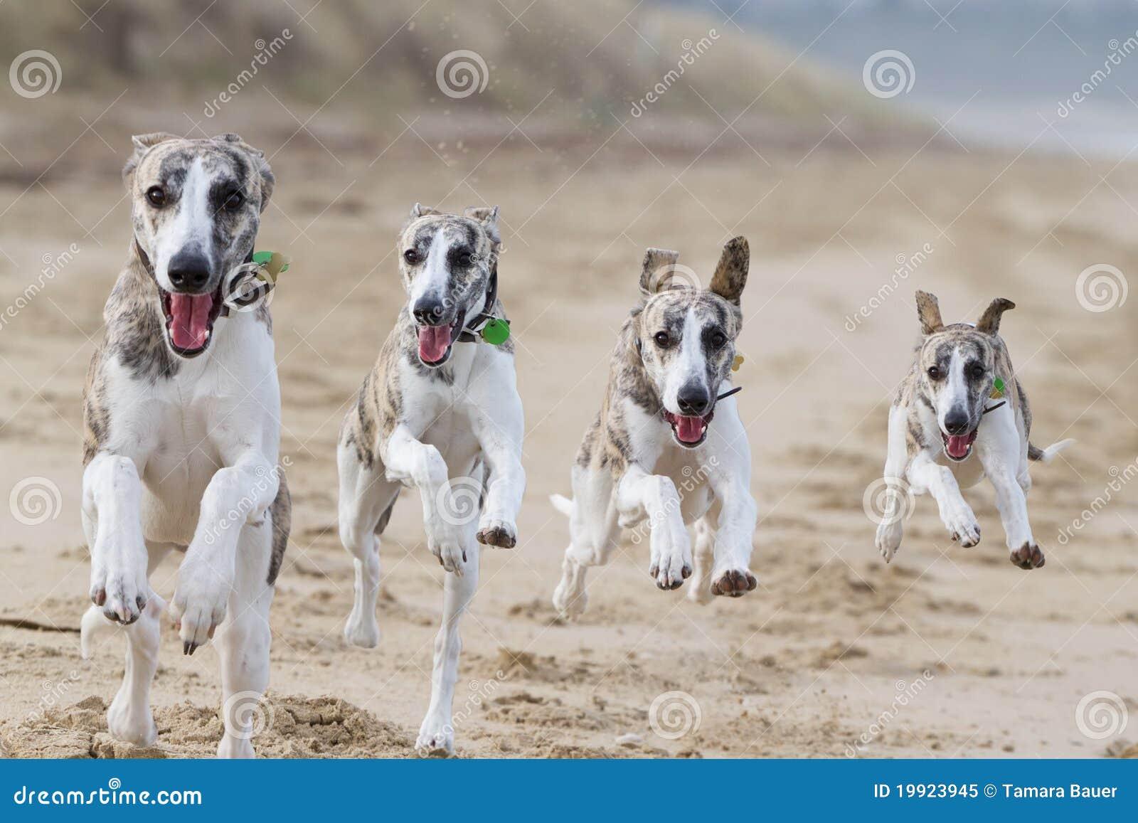 Perros corrientes