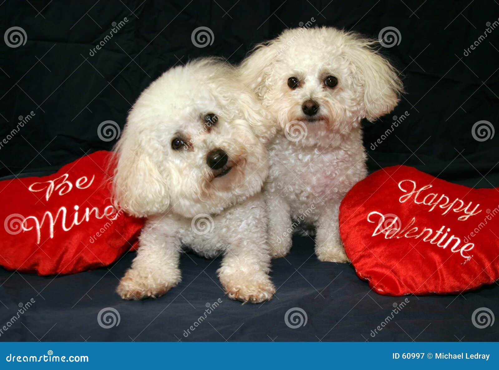 Perros de la tarjeta del día de San Valentín
