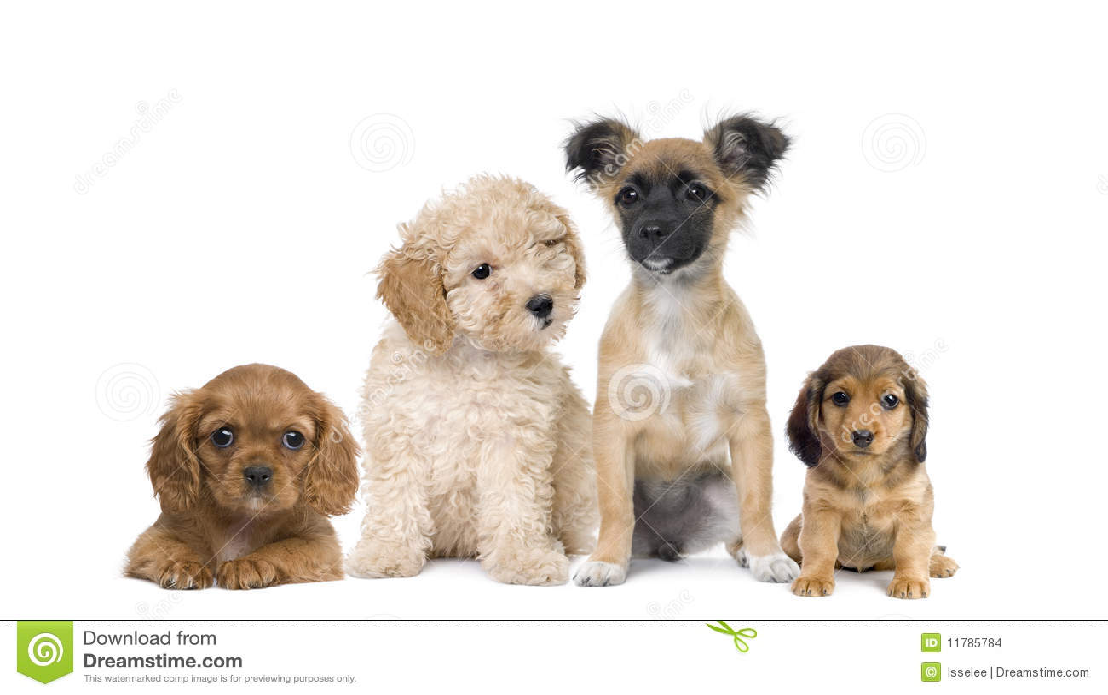 desktop backgrounds puppies and kittens